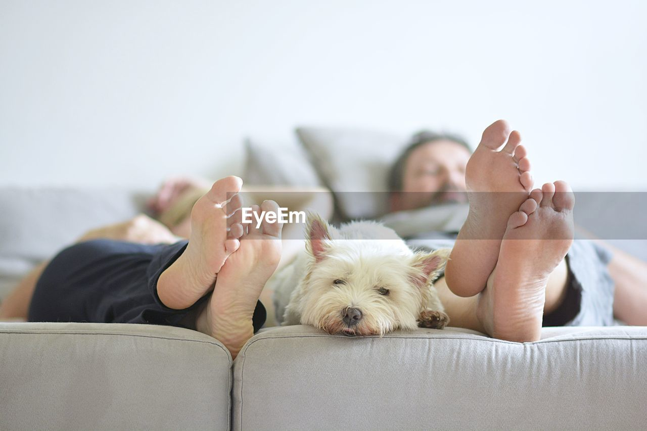 Couple With Dog Relaxing On Bed