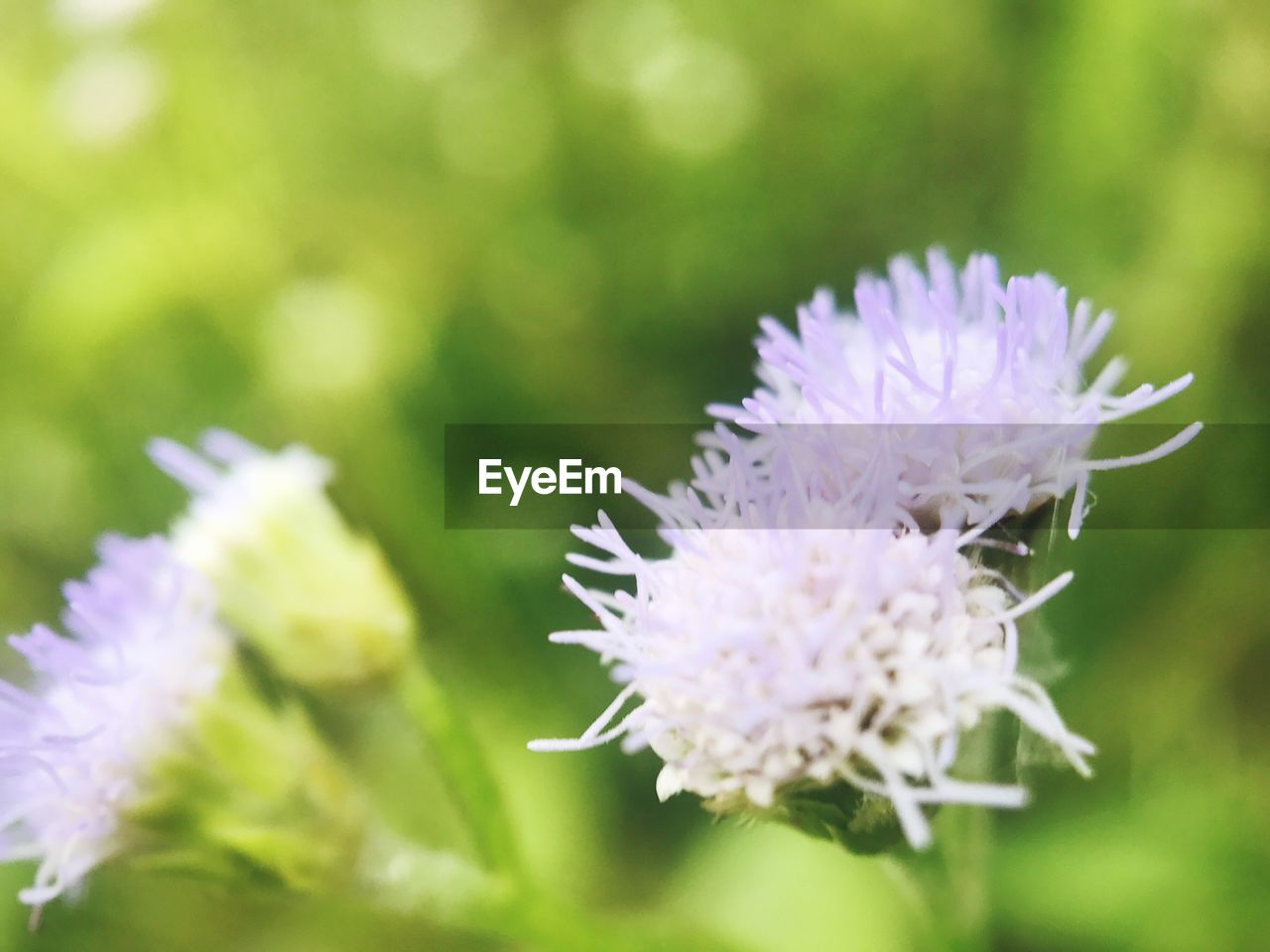 flower, nature, growth, purple, beauty in nature, no people, day, fragility, freshness, close-up, outdoors, plant, flower head, blooming