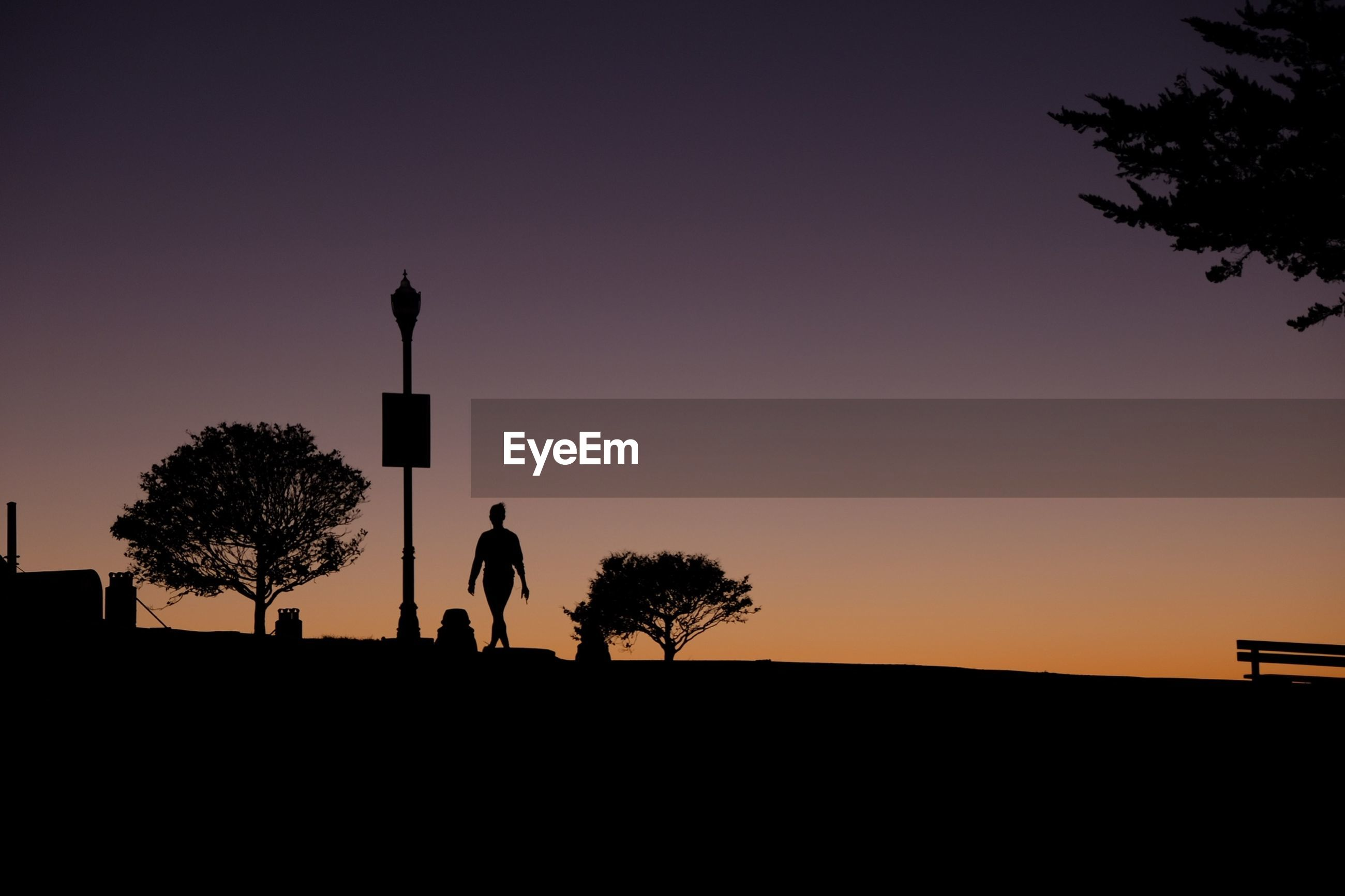 Silhouette of tree against clear sky at sunset