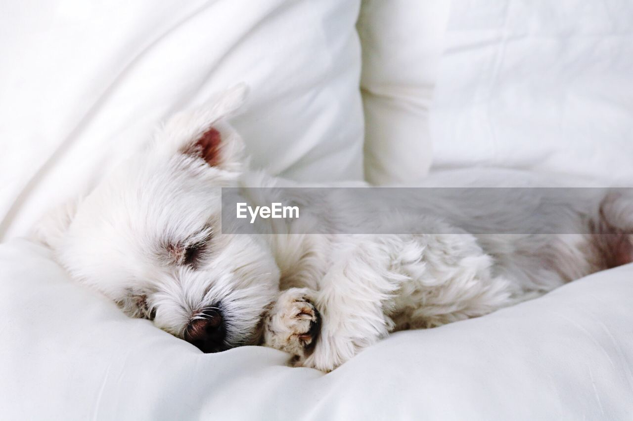 Close-up of dog sleeping in pet bed at home
