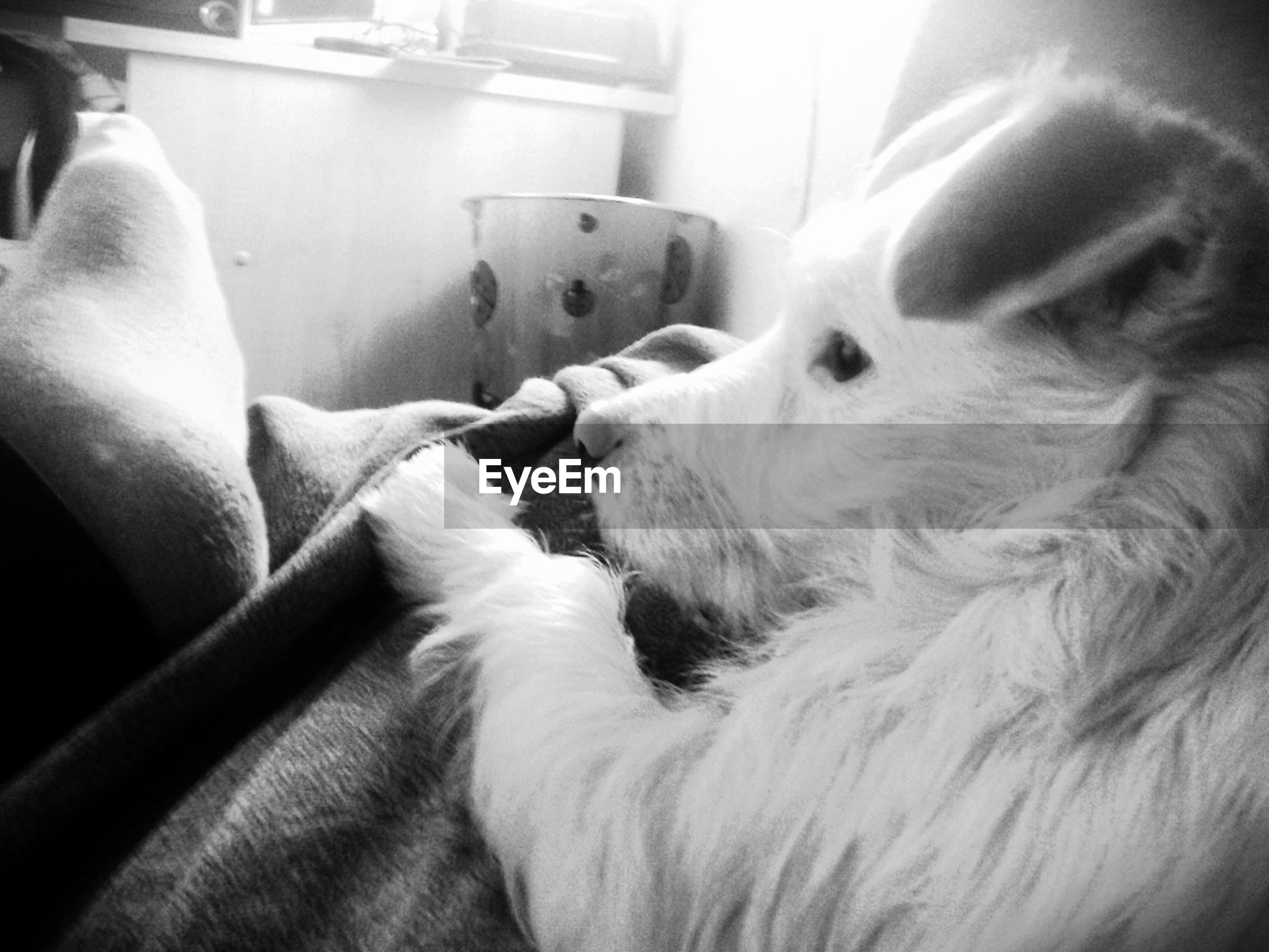 indoors, pets, domestic animals, animal themes, one animal, mammal, relaxation, sleeping, home interior, bed, resting, dog, domestic cat, lying down, sofa, close-up, home, cat, cute, comfortable