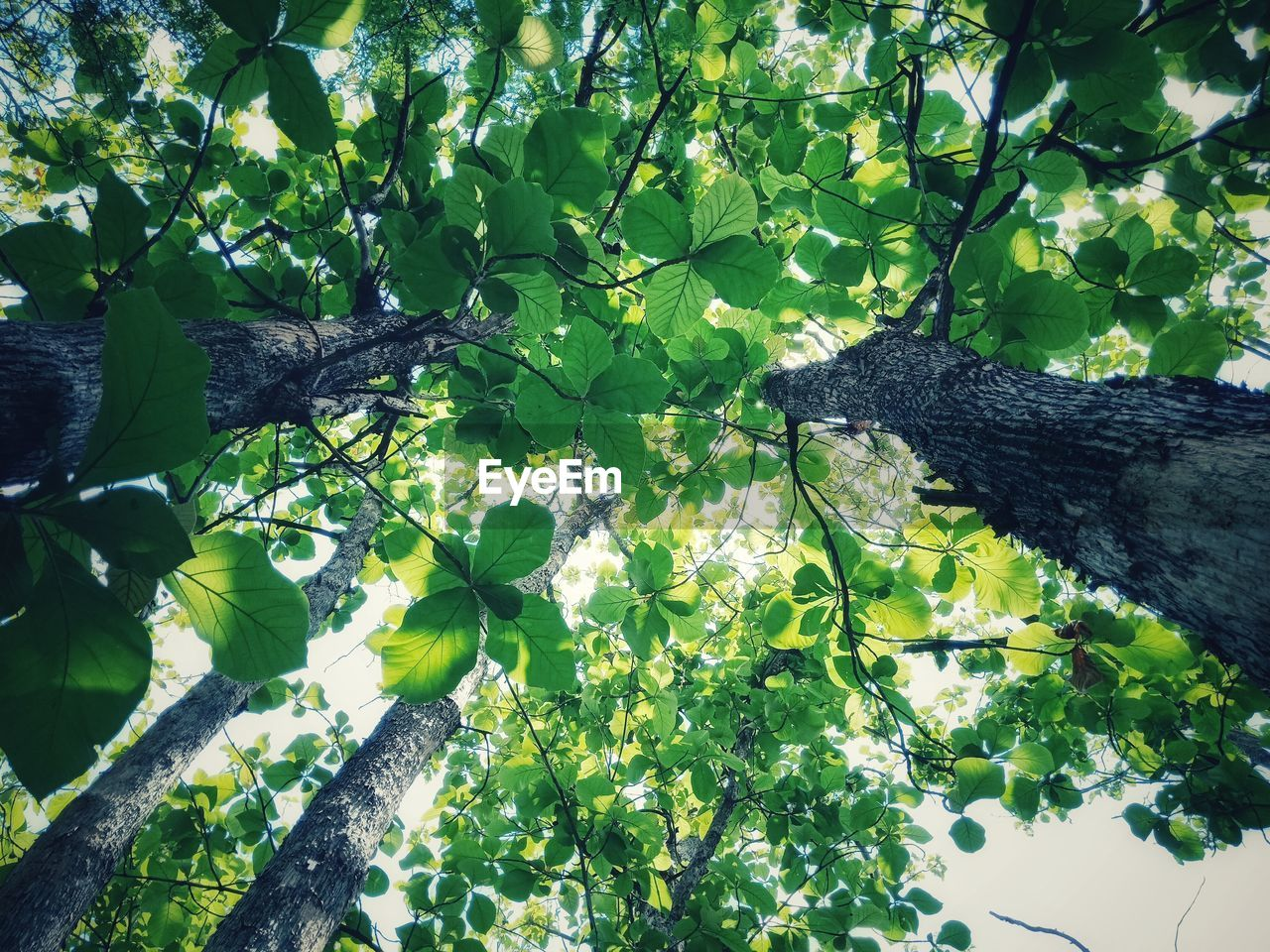 plant, growth, leaf, plant part, tree, nature, green color, no people, beauty in nature, day, branch, one animal, close-up, animal themes, sunlight, flowering plant, flower, animal, freshness, outdoors