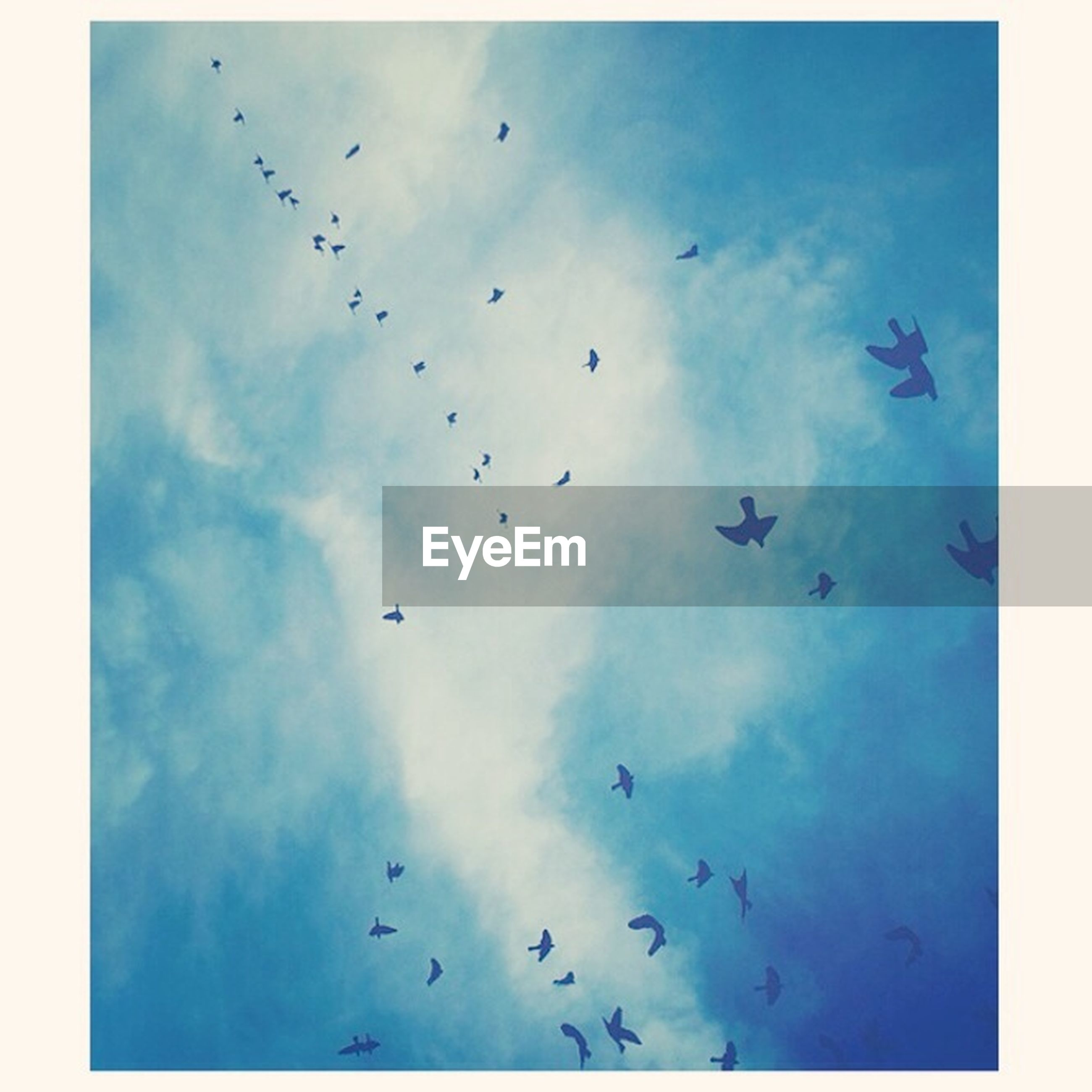 flying, bird, sky, low angle view, transfer print, animal themes, flock of birds, wildlife, animals in the wild, cloud - sky, auto post production filter, blue, cloud, nature, mid-air, beauty in nature, cloudy, silhouette, outdoors