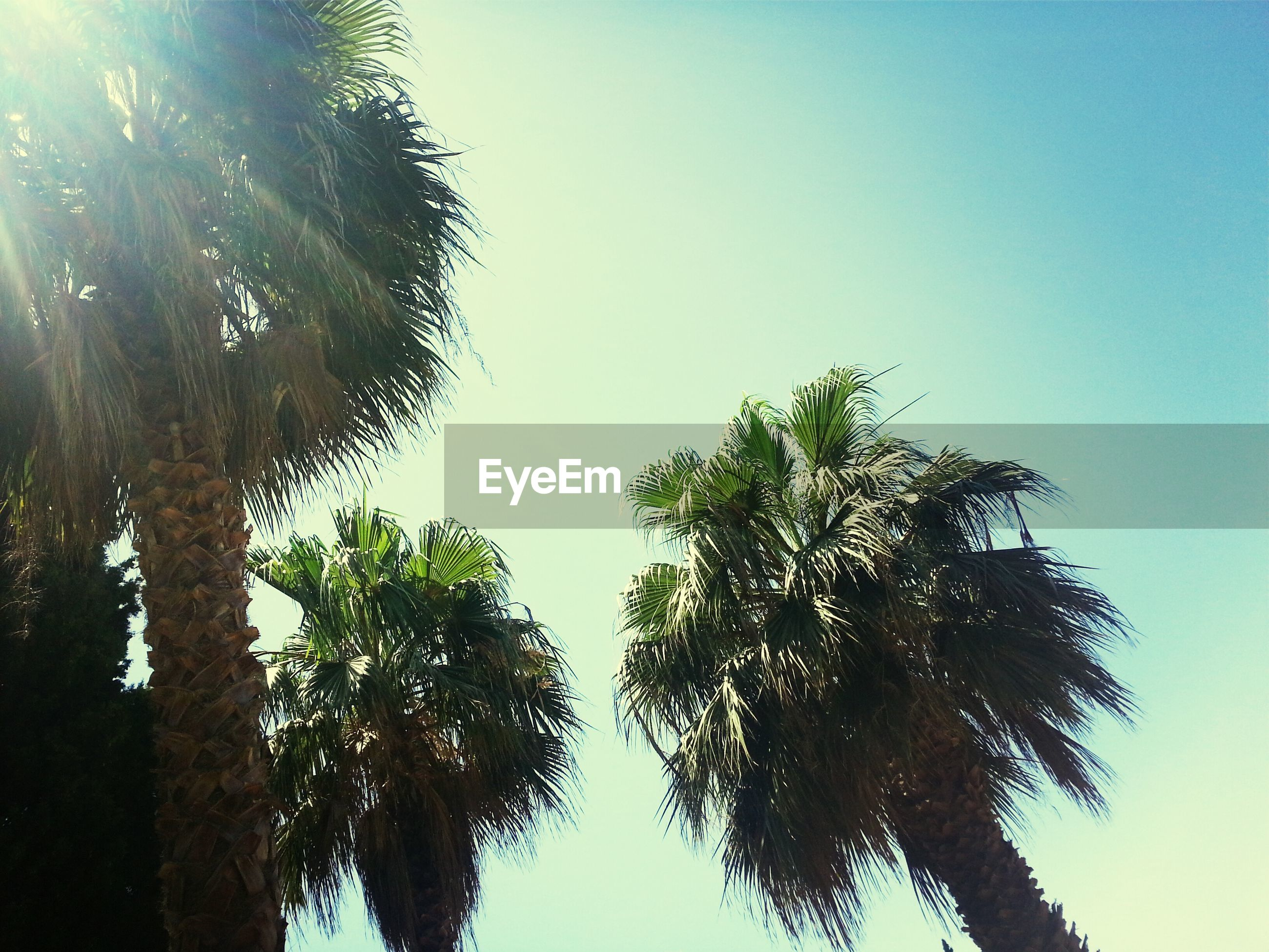tree, clear sky, tranquility, tranquil scene, beauty in nature, palm tree, growth, scenics, copy space, nature, low angle view, tree trunk, blue, water, sky, sunlight, idyllic, silhouette, day, outdoors