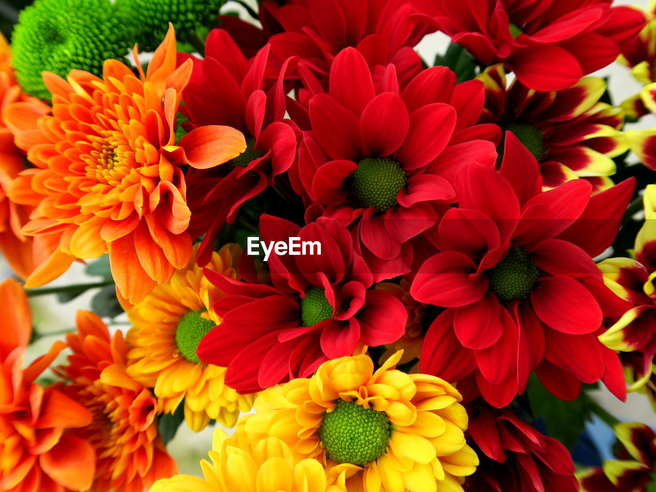 flower, petal, fragility, freshness, beauty in nature, flower head, nature, growth, red, no people, blooming, close-up, plant, outdoors, day