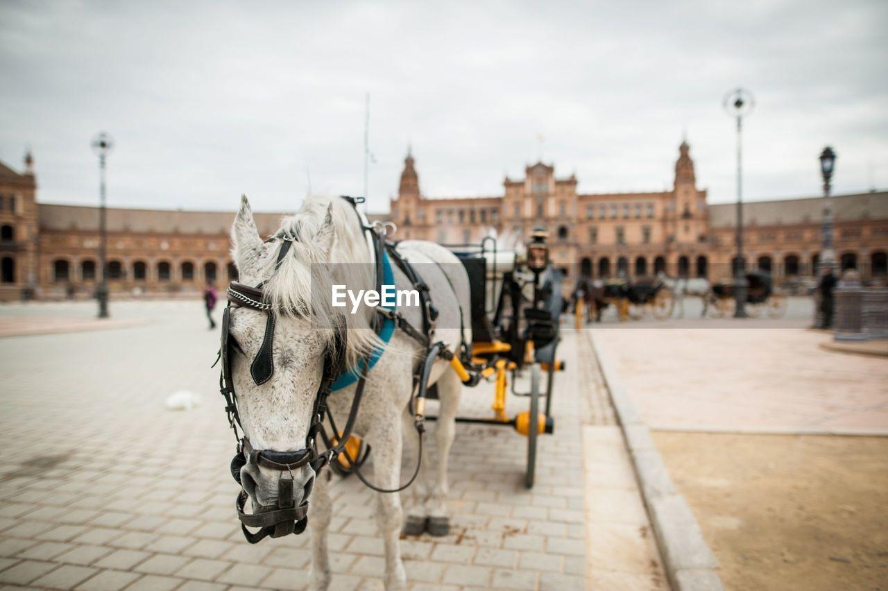 Horse carts on street at plaza de espana