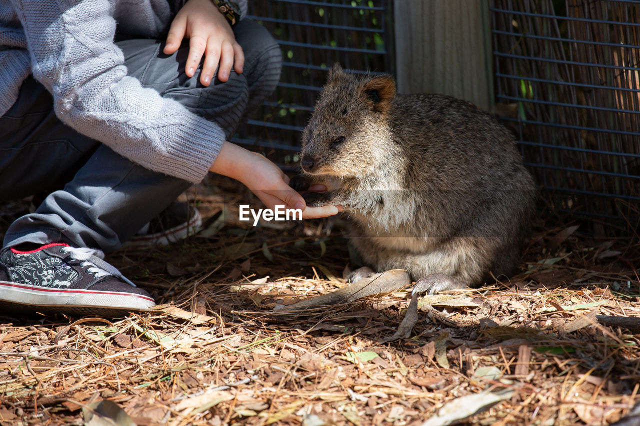mammal, animal wildlife, vertebrate, eating, one animal, real people, feeding, day, animals in the wild, one person, food, hand, human body part, human hand, nature, outdoors