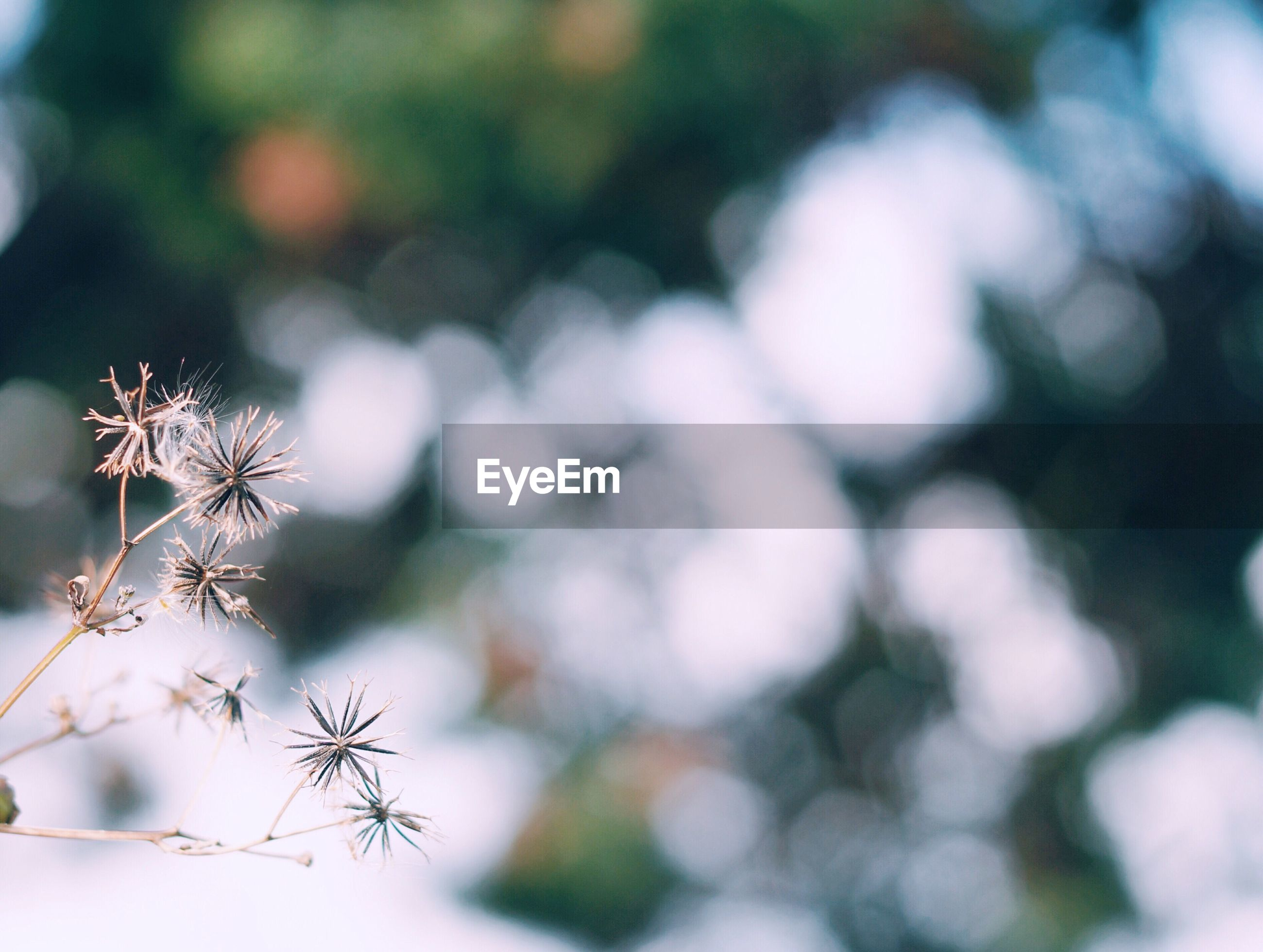 close-up, plant, nature, focus on foreground, growth, no people, outdoors, branch, beauty in nature, tree, day, fragility