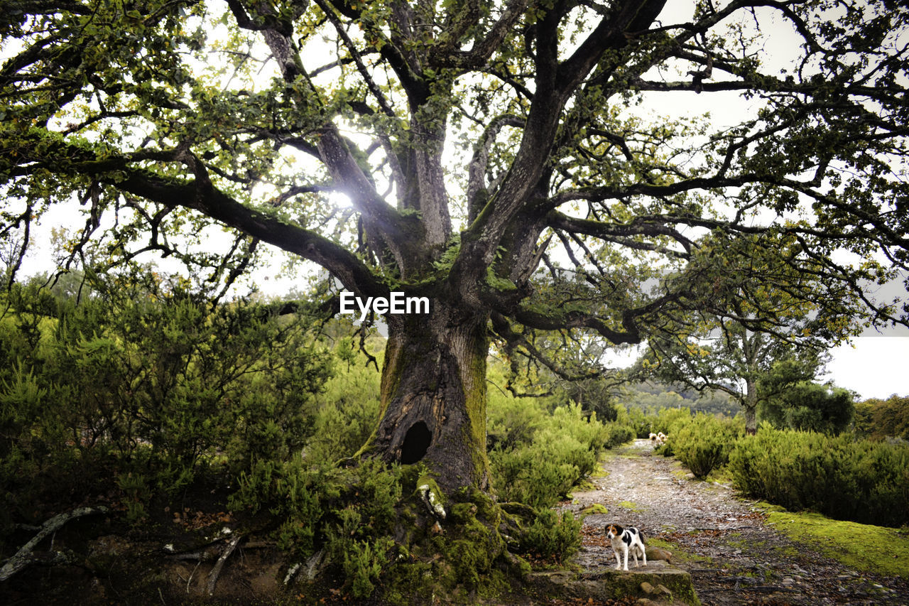 Dog Standing By Tree In Forest