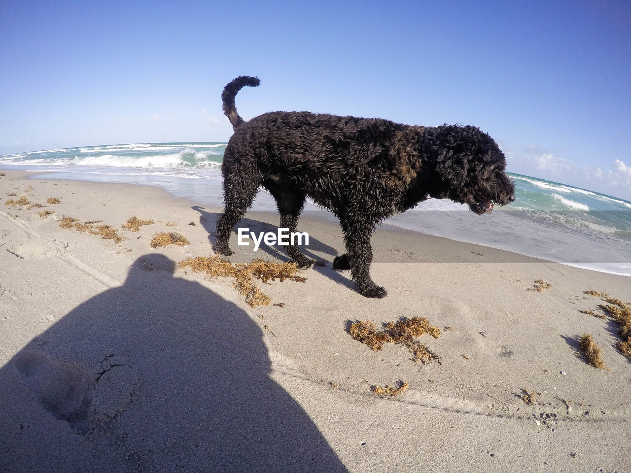 Profile view of wet dog walking on beach
