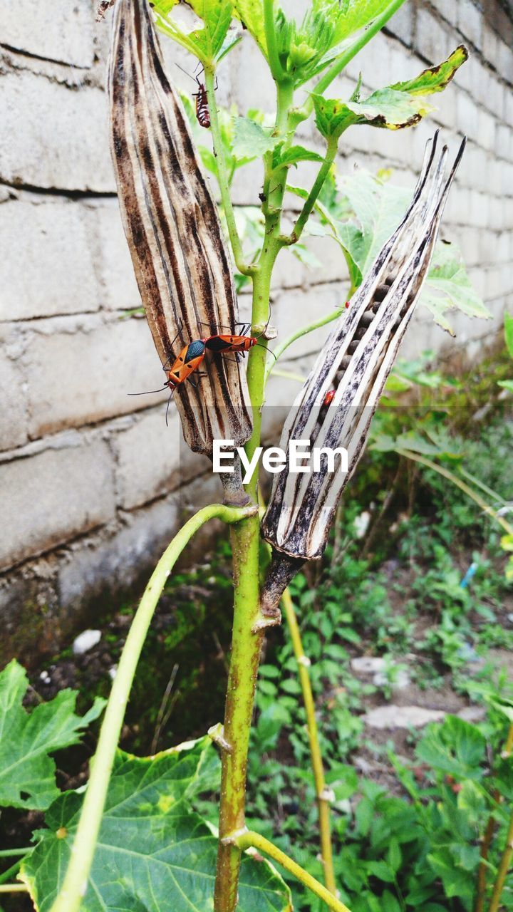 plant, day, nature, growth, animal wildlife, focus on foreground, green color, animals in the wild, one animal, close-up, invertebrate, animal themes, animal, no people, insect, leaf, plant part, outdoors, beauty in nature, tree, animal wing, butterfly - insect