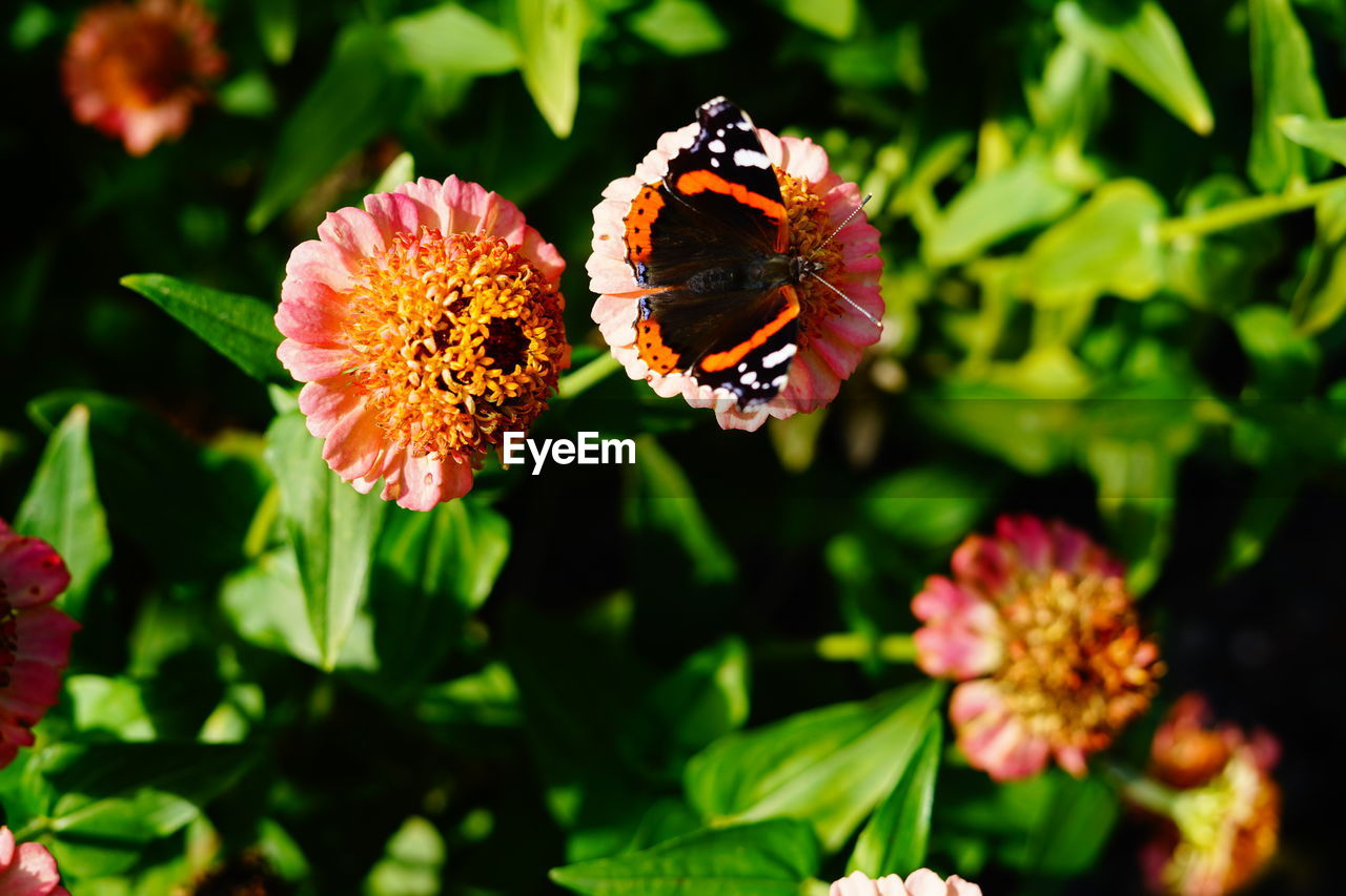 flowering plant, flower, plant, vulnerability, fragility, petal, beauty in nature, freshness, flower head, growth, inflorescence, nature, animals in the wild, close-up, invertebrate, insect, animal wildlife, focus on foreground, animal themes, one animal, pollination, no people, pollen, outdoors