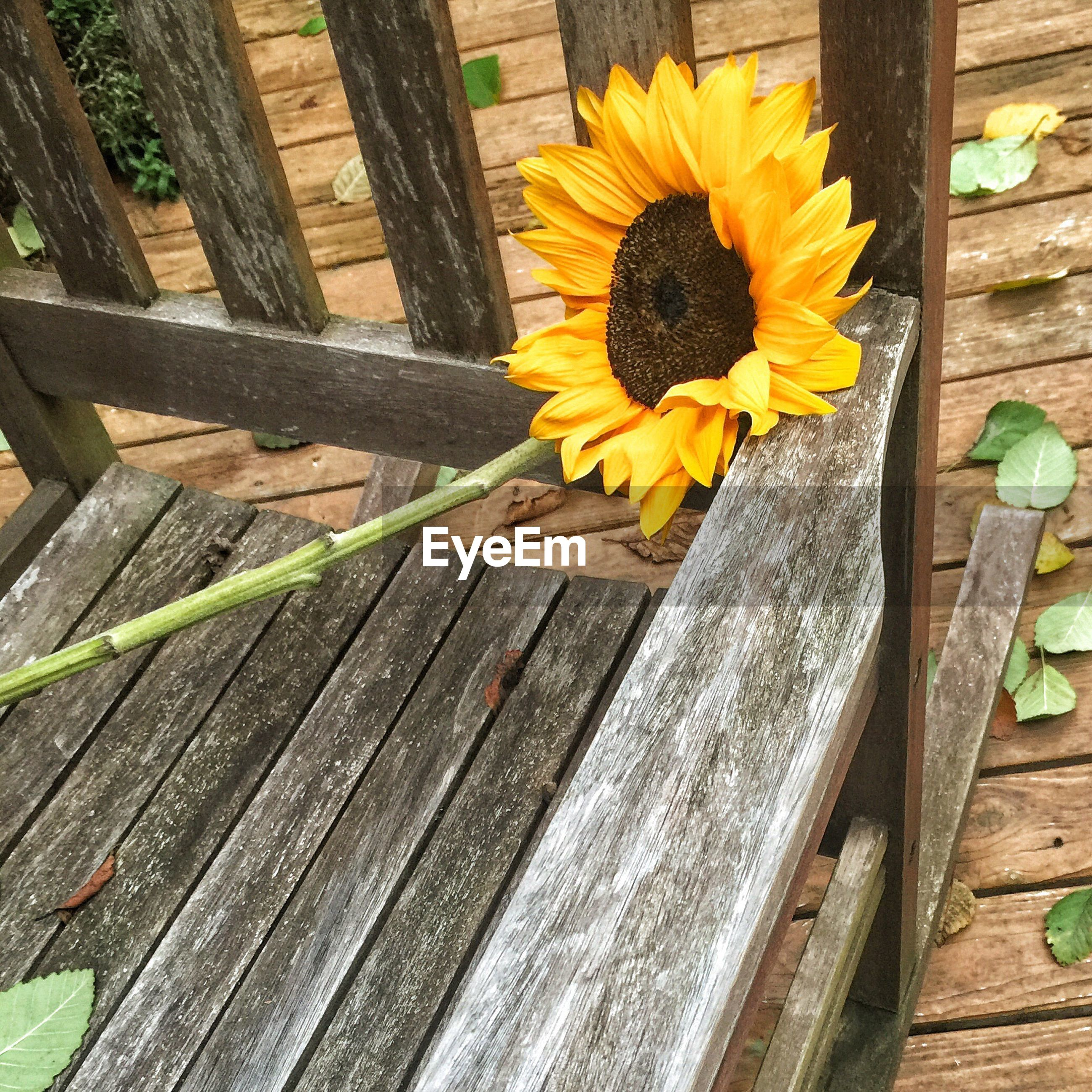 CLOSE-UP OF YELLOW FLOWER GROWING ON WOOD