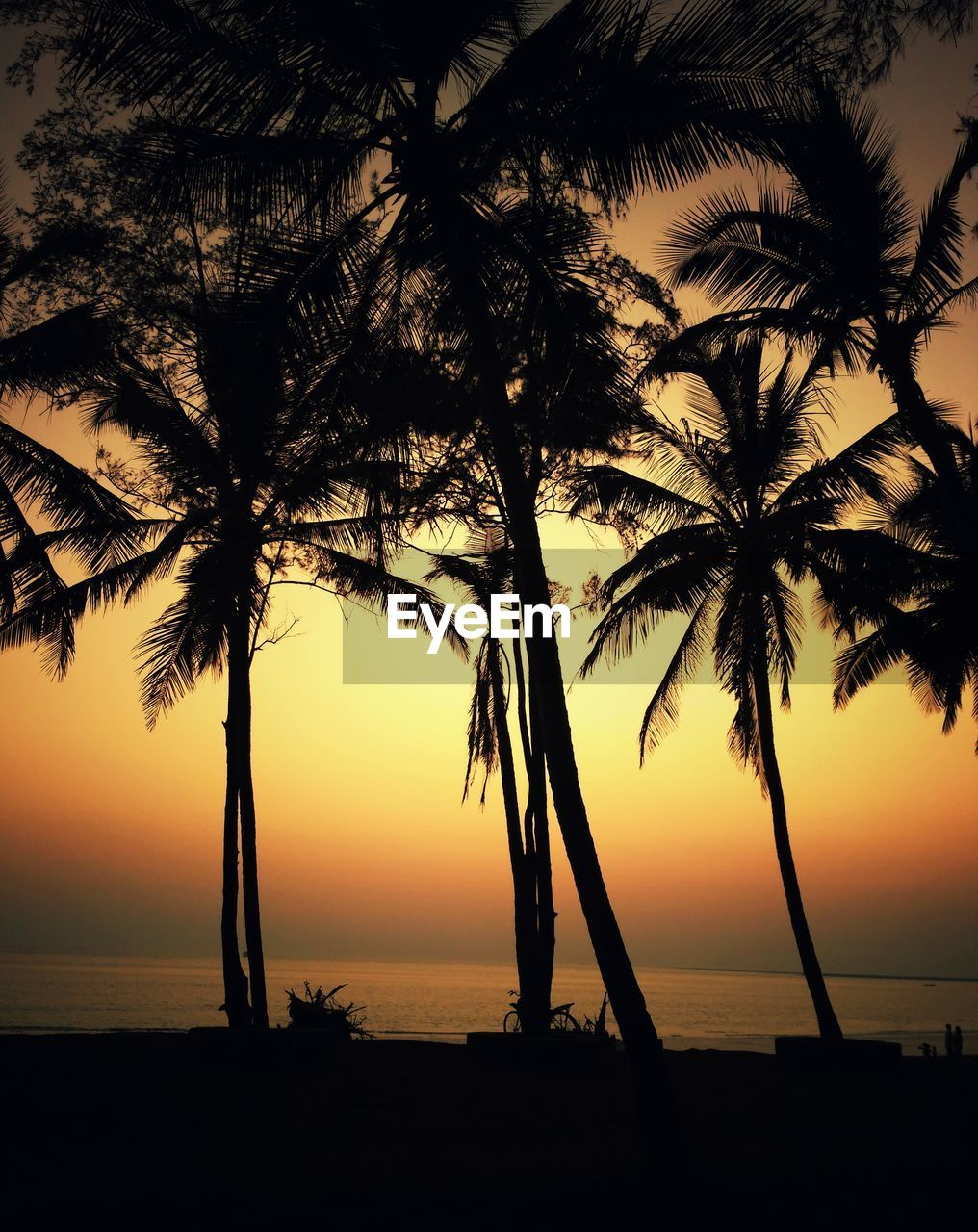 tree, palm tree, sunset, beauty in nature, sea, scenics, nature, tranquility, silhouette, tranquil scene, tree trunk, idyllic, no people, beach, water, sun, horizon over water, sky, growth, outdoors
