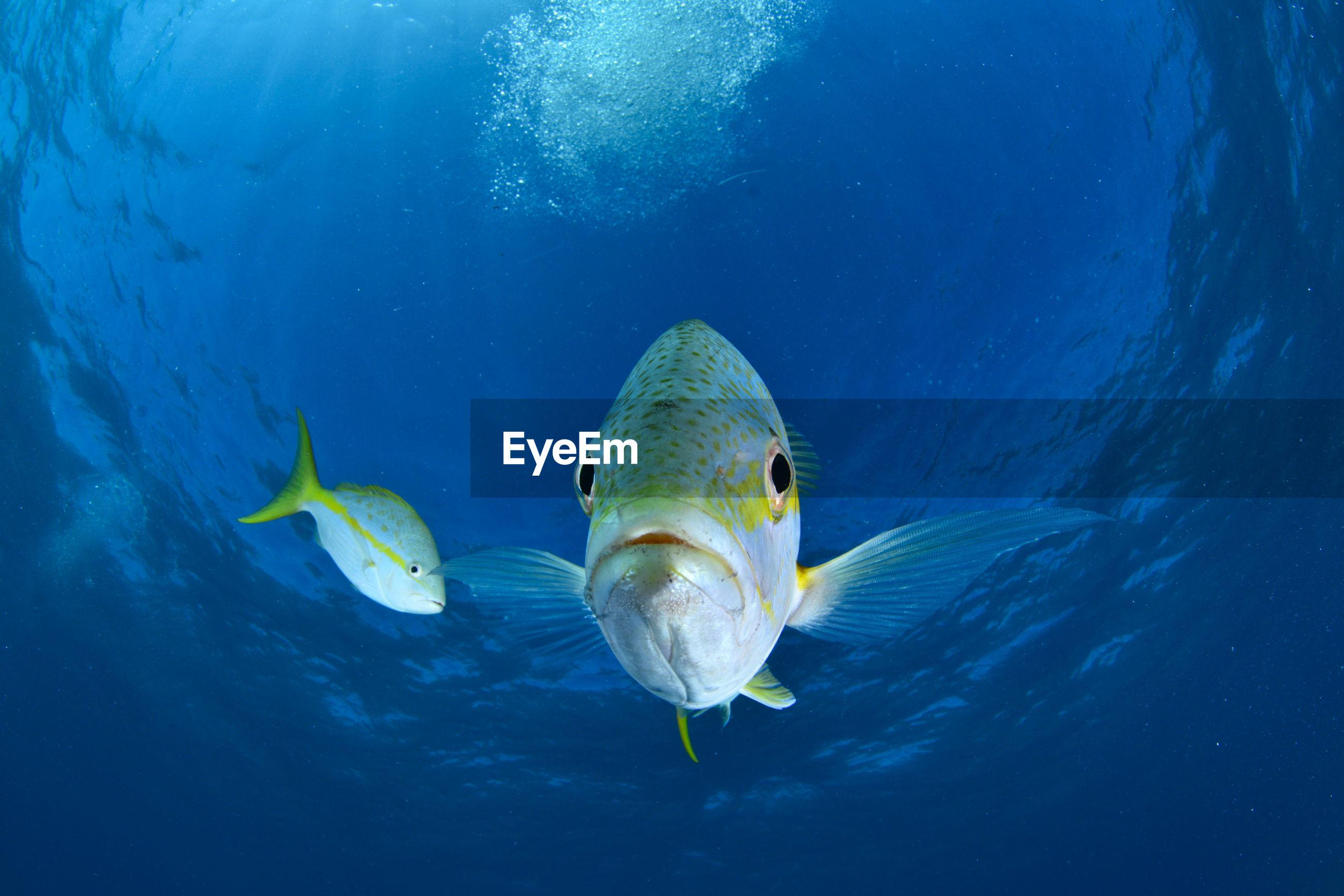 Close-up of fish looking to camera