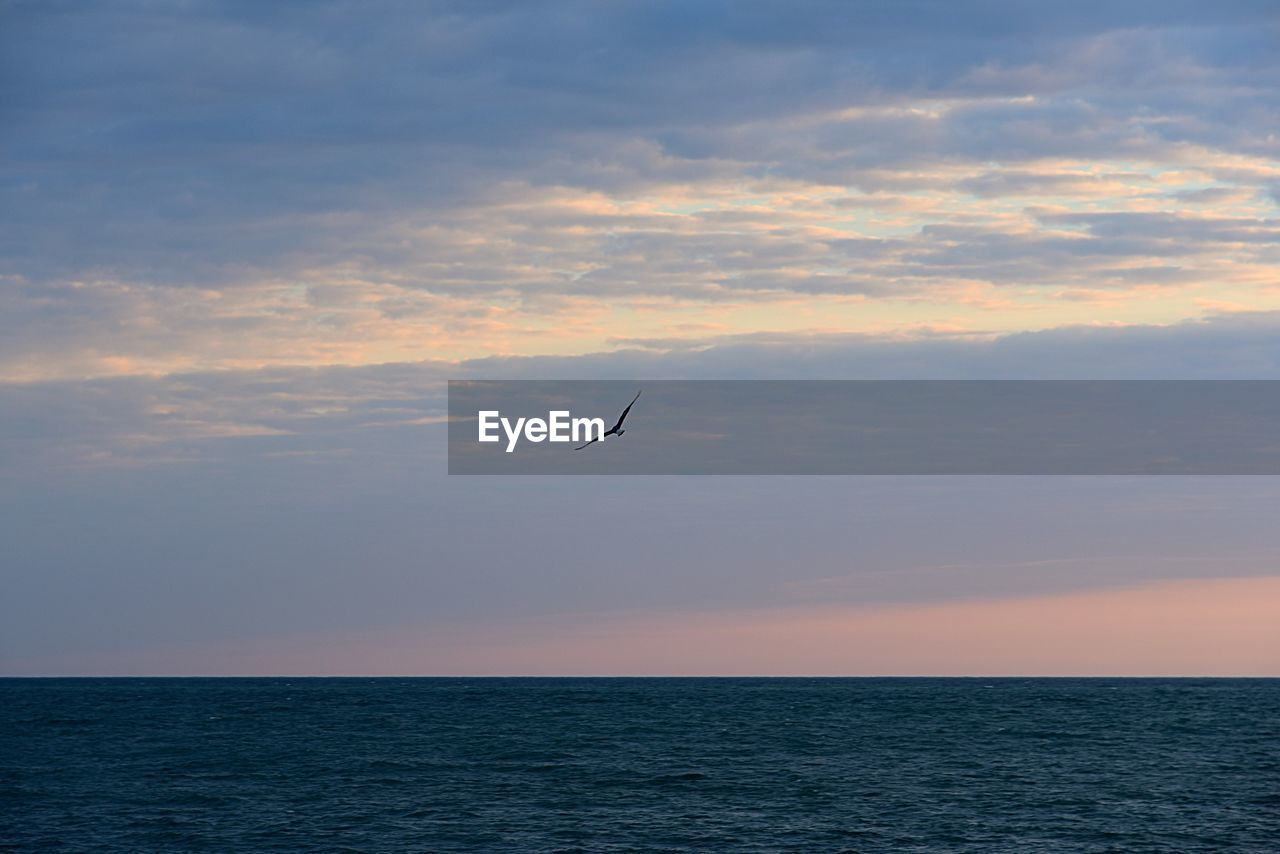 sky, cloud - sky, sea, horizon over water, sunset, horizon, scenics - nature, water, beauty in nature, tranquil scene, vertebrate, tranquility, animal themes, animal, waterfront, bird, nature, one animal, flying, no people, outdoors