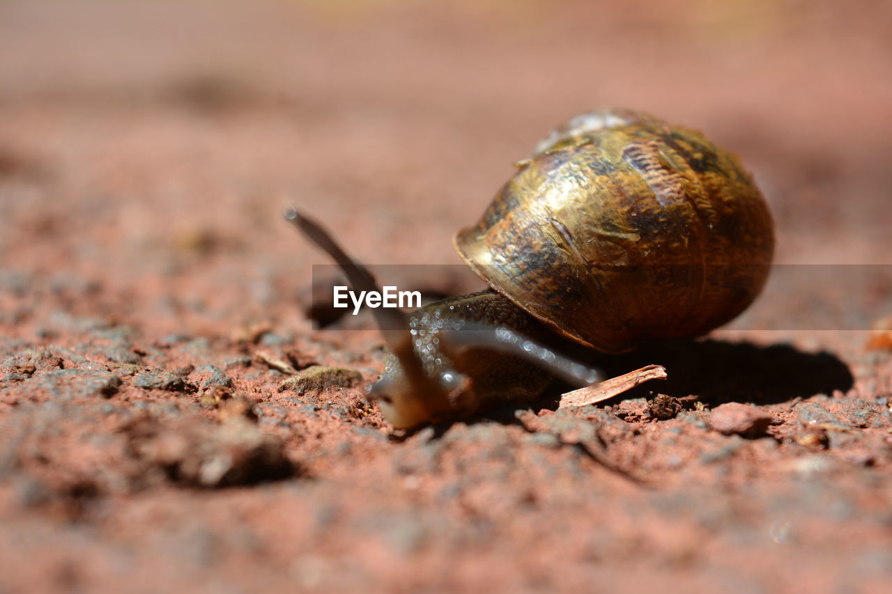 CLOSE-UP OF SNAIL ON DIRT LAND