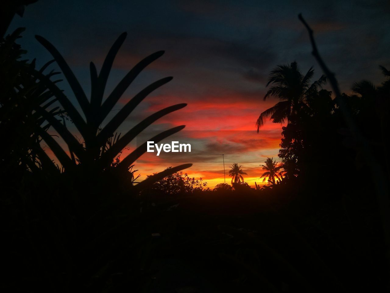 silhouette, plant, sky, beauty in nature, sunset, orange color, cloud - sky, scenics - nature, nature, growth, tranquility, tree, no people, tranquil scene, non-urban scene, idyllic, land, outdoors, palm tree, leaf