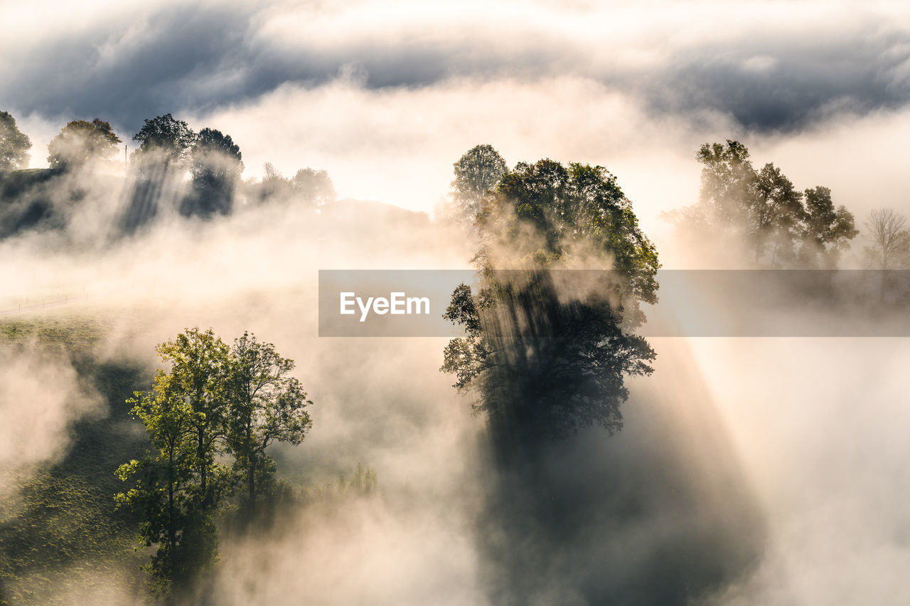 Scenic view of trees against sky