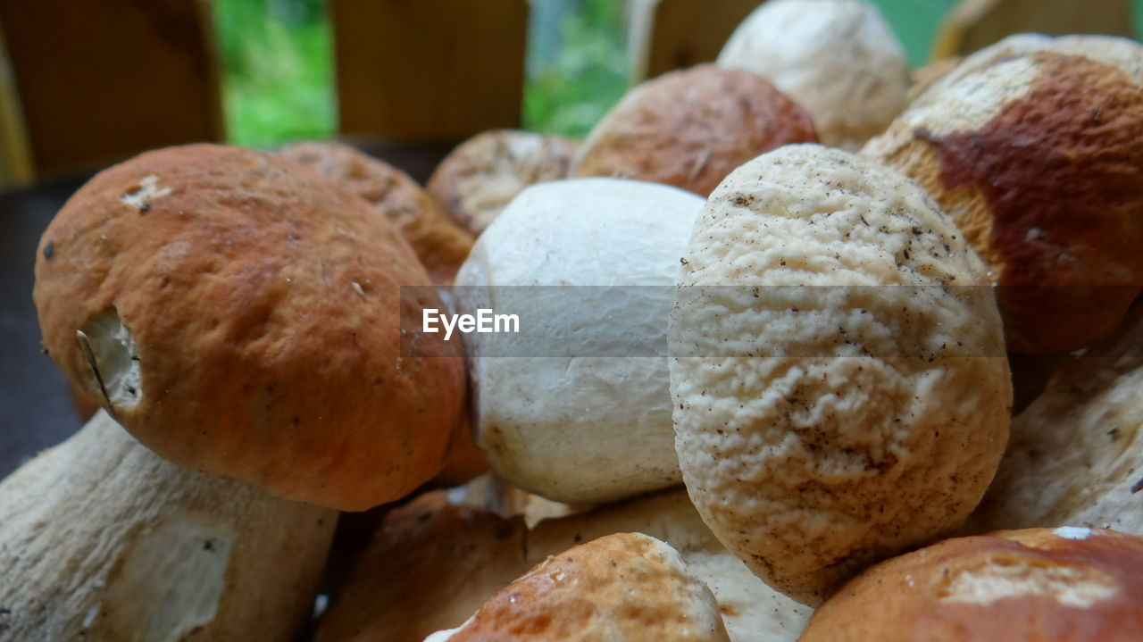 Close-Up Of Porcini Mushrooms