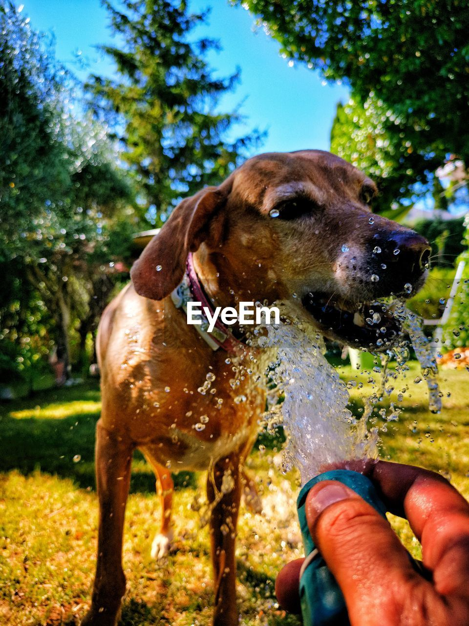 domestic, domestic animals, animal themes, pets, mammal, animal, one animal, dog, canine, vertebrate, human hand, one person, nature, human body part, hand, plant, real people, day, tree, unrecognizable person, finger, outdoors