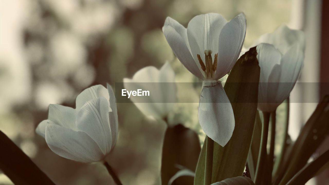 growth, beauty in nature, plant, vulnerability, freshness, fragility, close-up, flower, petal, flowering plant, focus on foreground, white color, inflorescence, no people, flower head, nature, day, outdoors, plant stem, selective focus, spring