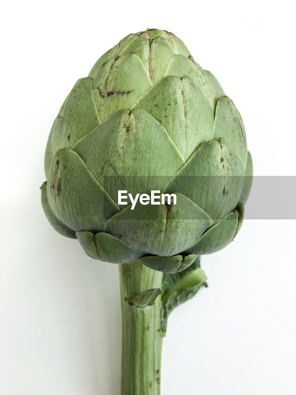 Close-up of artichoke against white background