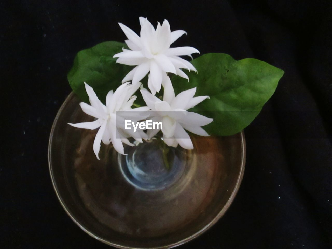 flower, flowering plant, plant, beauty in nature, fragility, vulnerability, petal, freshness, nature, close-up, inflorescence, indoors, flower head, leaf, plant part, white color, table, no people, directly above, high angle view, pollen, floating on water, flower arrangement