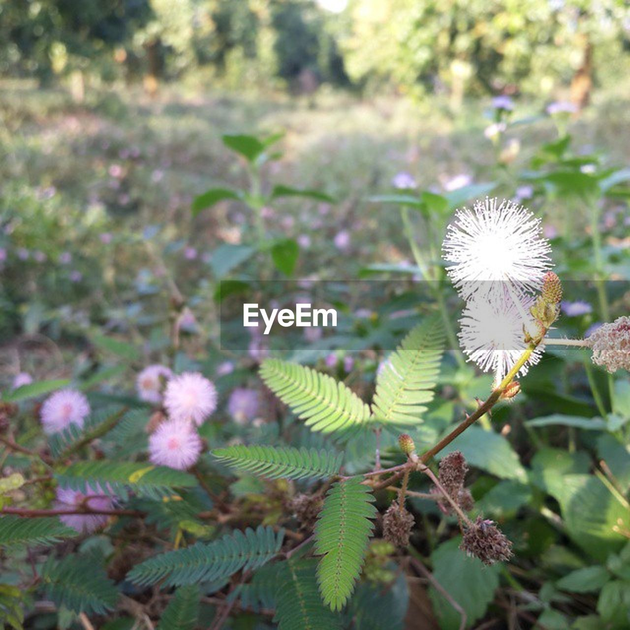 growth, plant, nature, flower, fragility, no people, outdoors, freshness, beauty in nature, day, close-up
