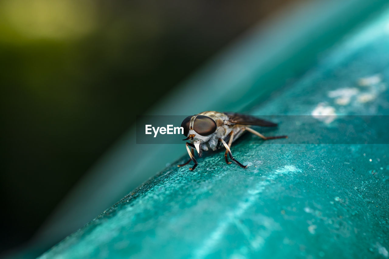 Close-up of a horse fly's compound eyes