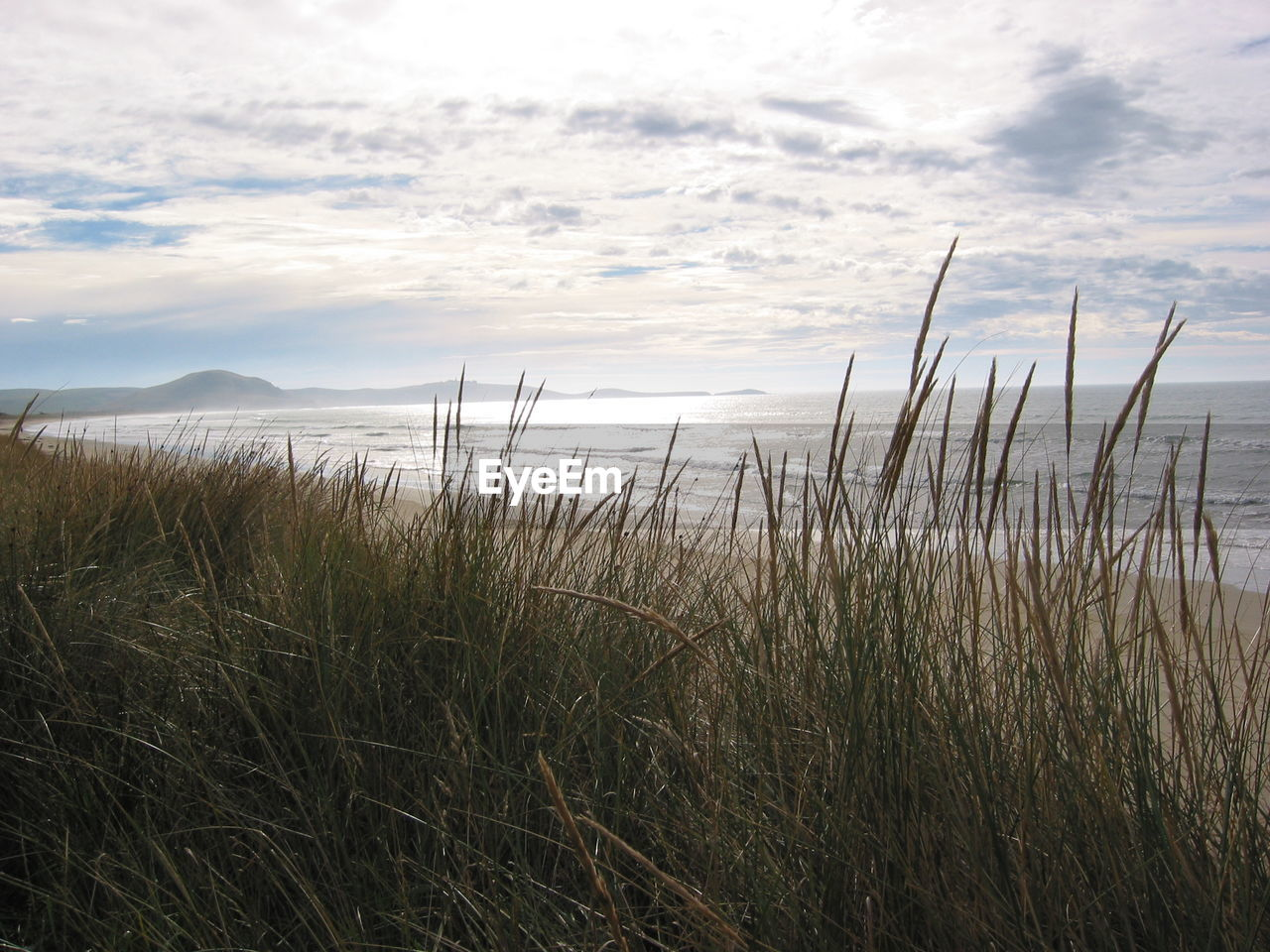 nature, tranquility, tranquil scene, scenics, beauty in nature, grass, growth, water, sky, sea, outdoors, day, no people, cloud - sky, beach, landscape, marram grass, horizon over water