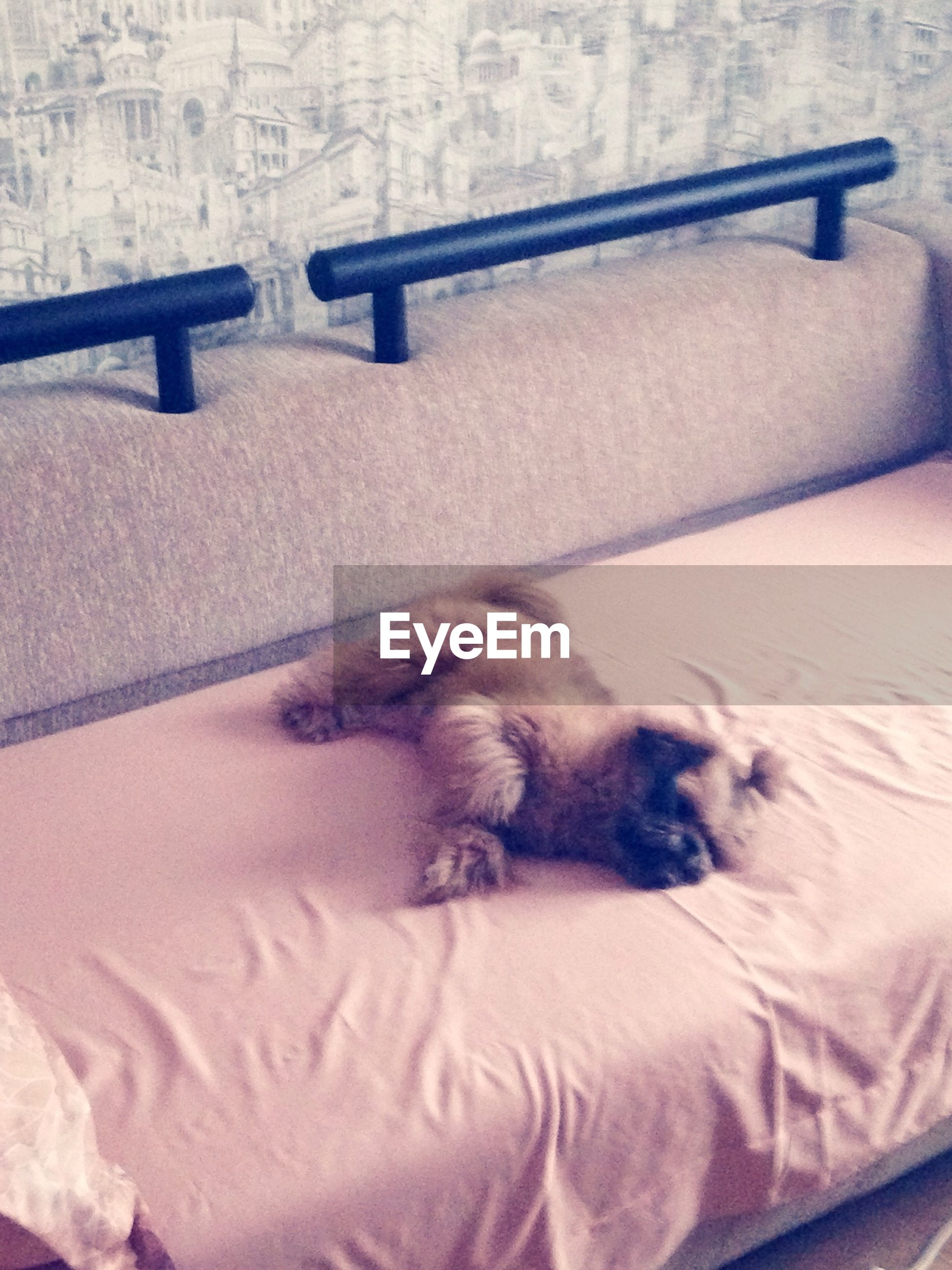 indoors, pets, domestic animals, one animal, relaxation, bed, animal themes, resting, mammal, sleeping, lying down, domestic cat, home interior, high angle view, bedroom, close-up, cat, comfortable, pillow, sofa