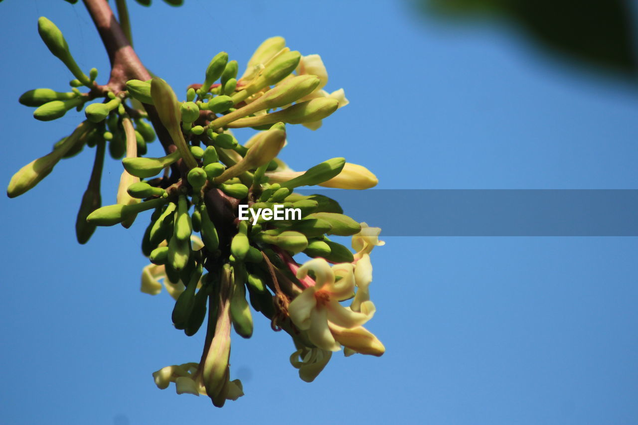 growth, nature, plant, blue, low angle view, beauty in nature, no people, clear sky, freshness, close-up, day, fragility, outdoors, tree, flower