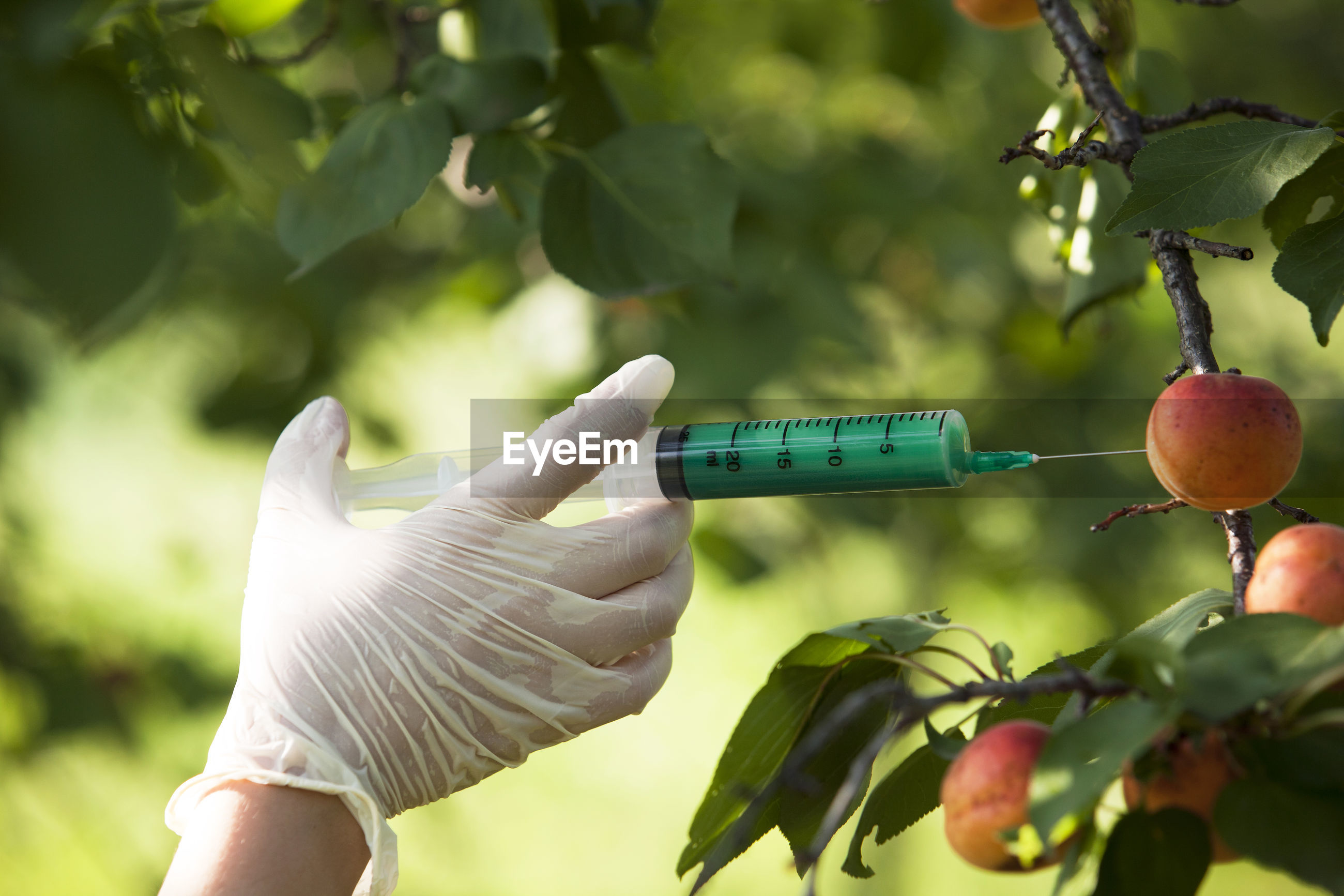 Cropped hand of person injecting insecticide in fruit