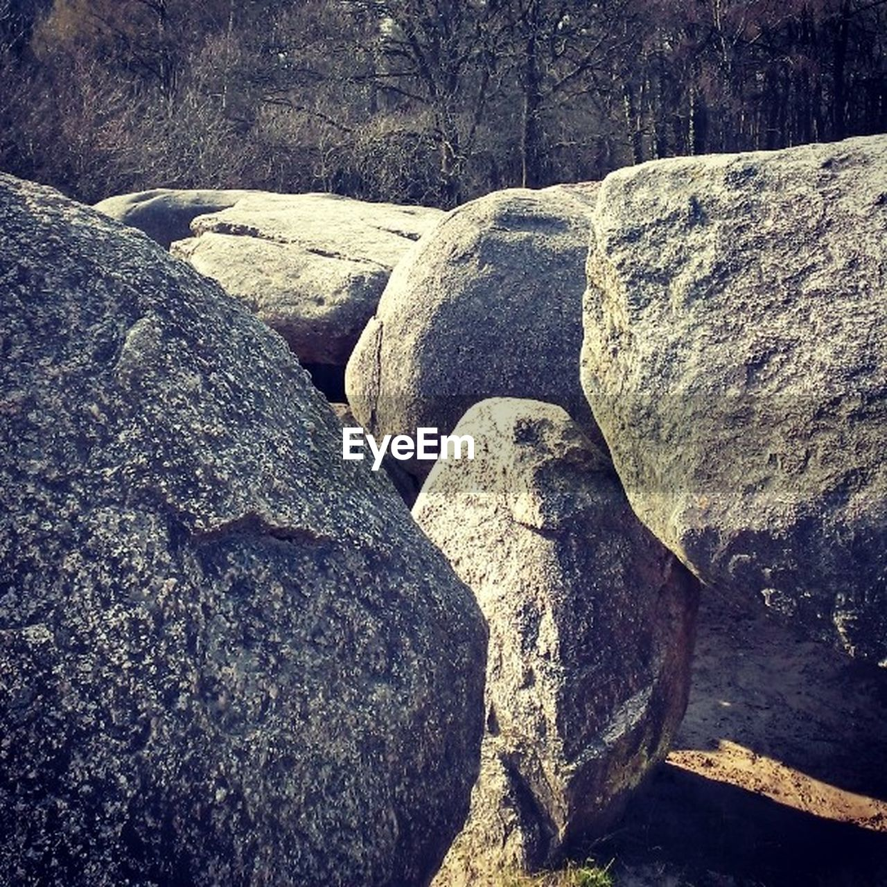 rock, solid, rock - object, no people, day, nature, textured, outdoors, tranquility, rough, land, tree, rock formation, close-up, gray, tranquil scene, stone - object, plant, toughness, beauty in nature, eroded