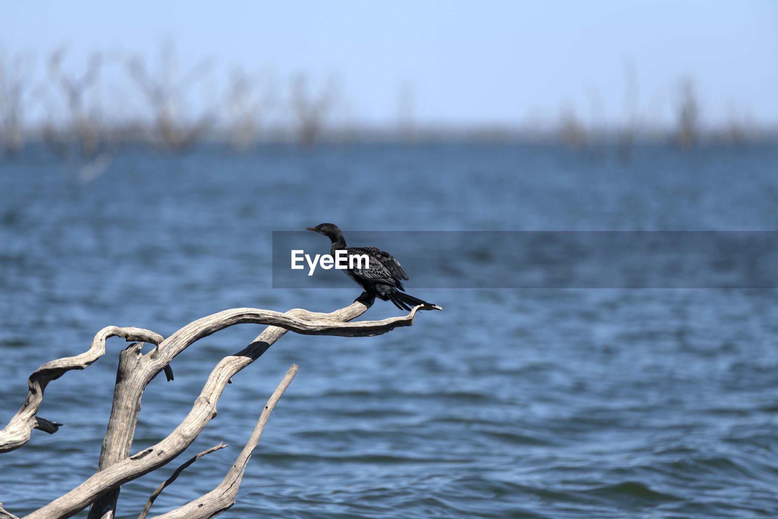 Bird perching on a sea