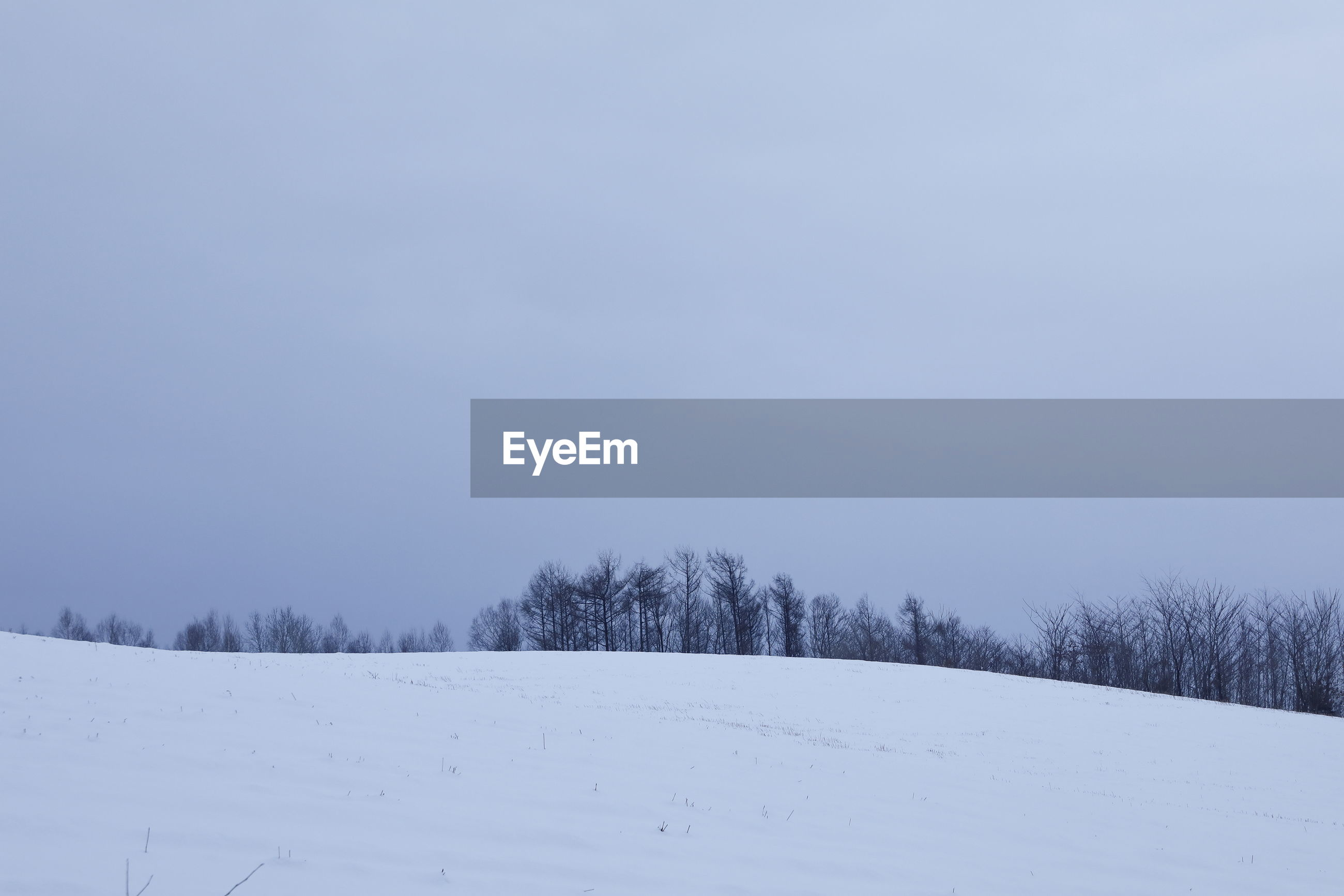Bare Trees On Snow Landscape Against Clear Sky