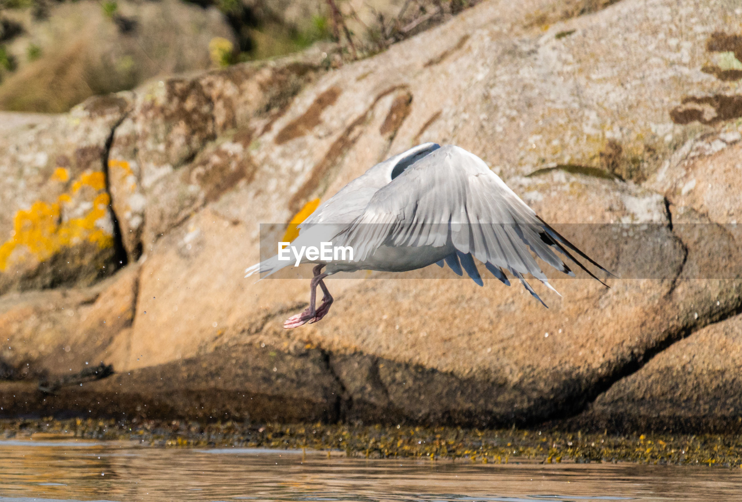 VIEW OF BIRD FLYING OVER ROCK