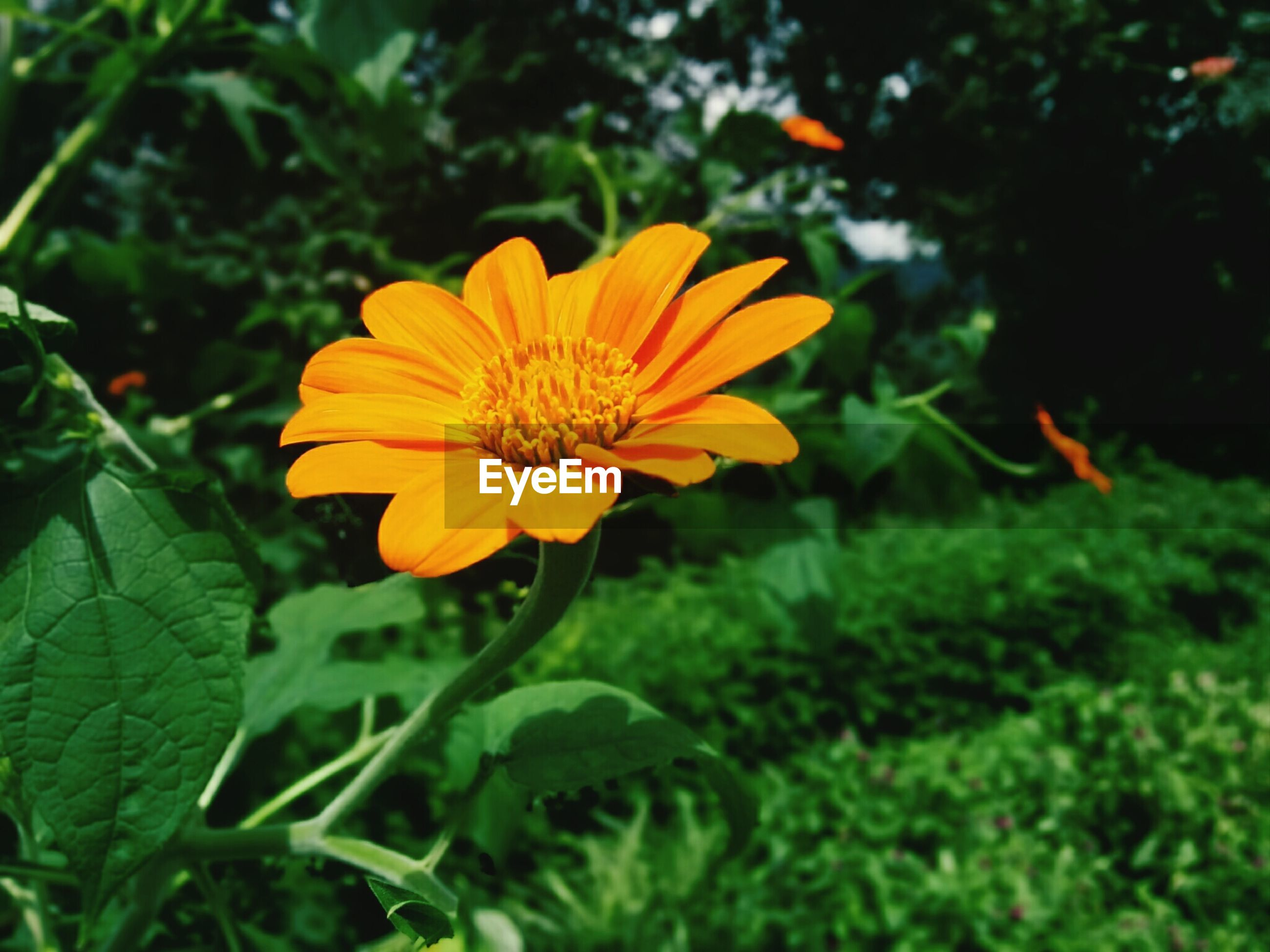 flower, petal, freshness, fragility, growth, flower head, yellow, beauty in nature, focus on foreground, blooming, close-up, plant, nature, pollen, orange color, in bloom, green color, single flower, leaf, park - man made space