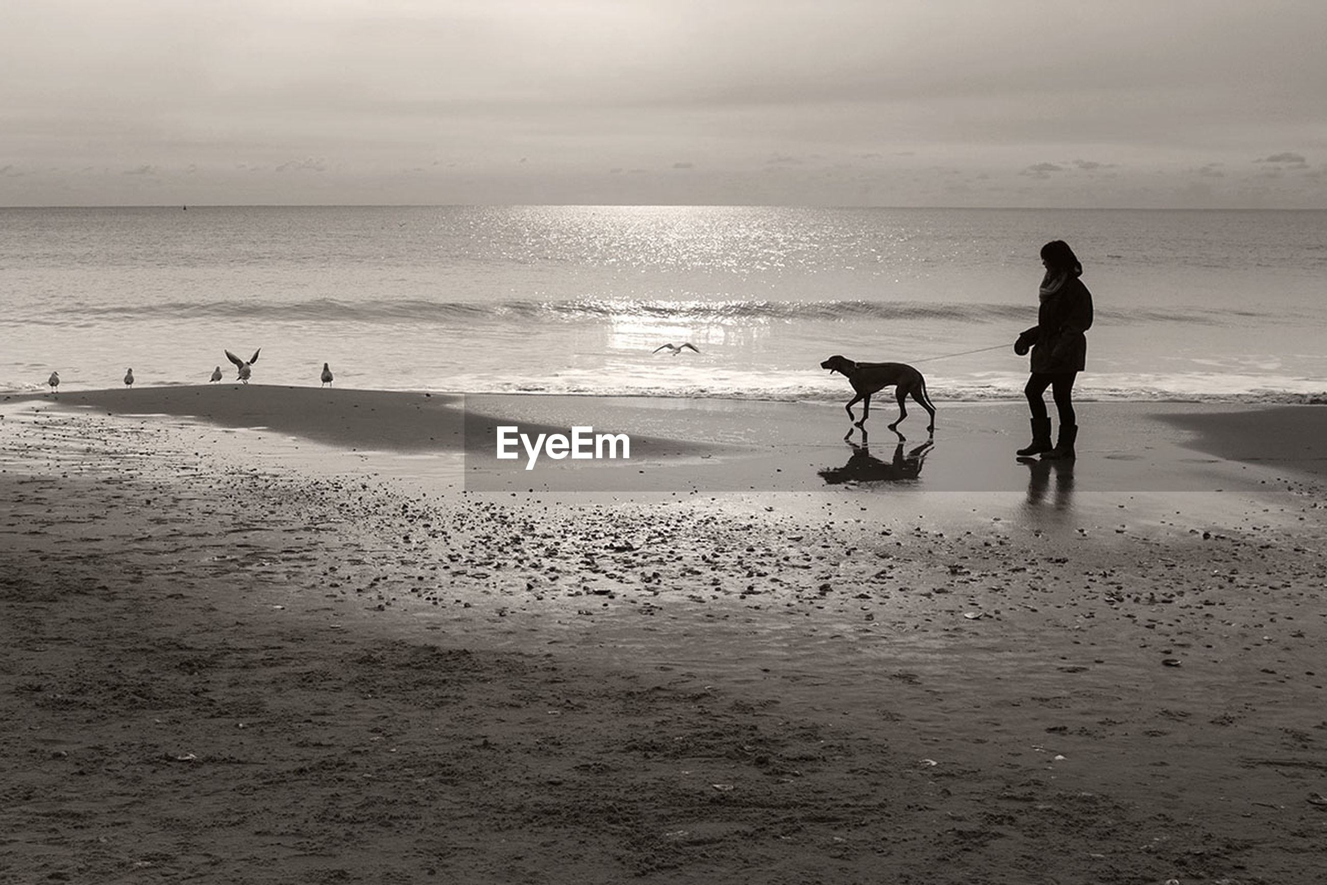 beach, sea, horizon over water, sand, shore, domestic animals, dog, water, pets, sky, mammal, animal themes, leisure activity, men, full length, lifestyles, wave, vacations, one animal