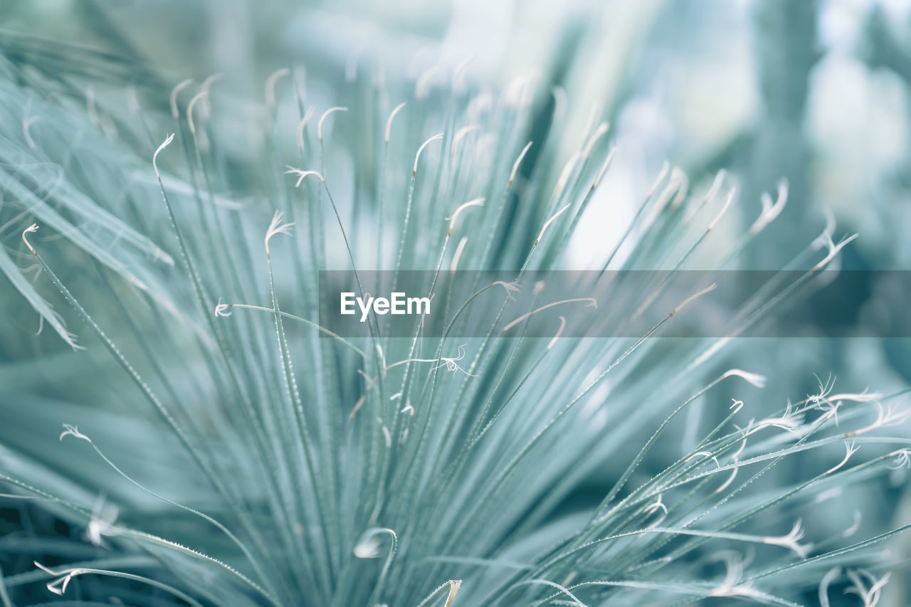 growth, plant, close-up, no people, selective focus, beauty in nature, day, nature, green color, full frame, fragility, vulnerability, outdoors, focus on foreground, freshness, tranquility, backgrounds, field, pattern, natural pattern, blade of grass