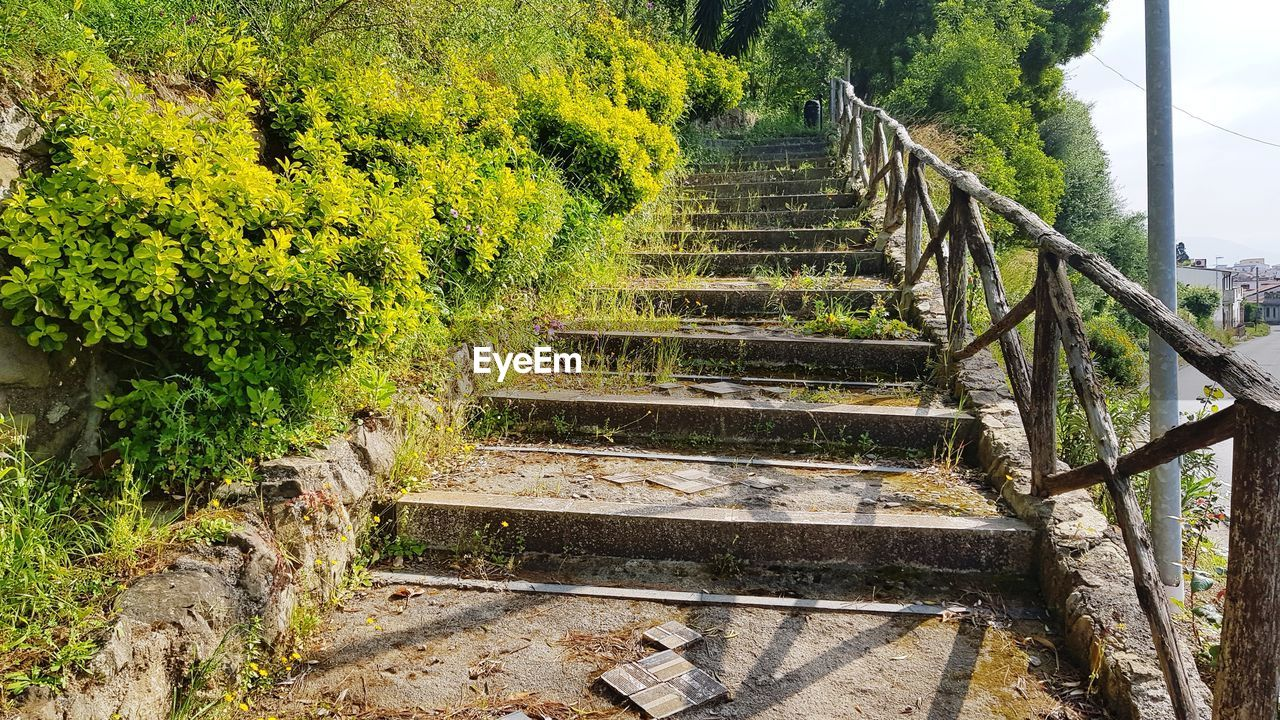 staircase, plant, steps and staircases, direction, architecture, the way forward, railing, nature, no people, tree, day, built structure, growth, outdoors, tranquility, beauty in nature, tranquil scene, green color, land, empty