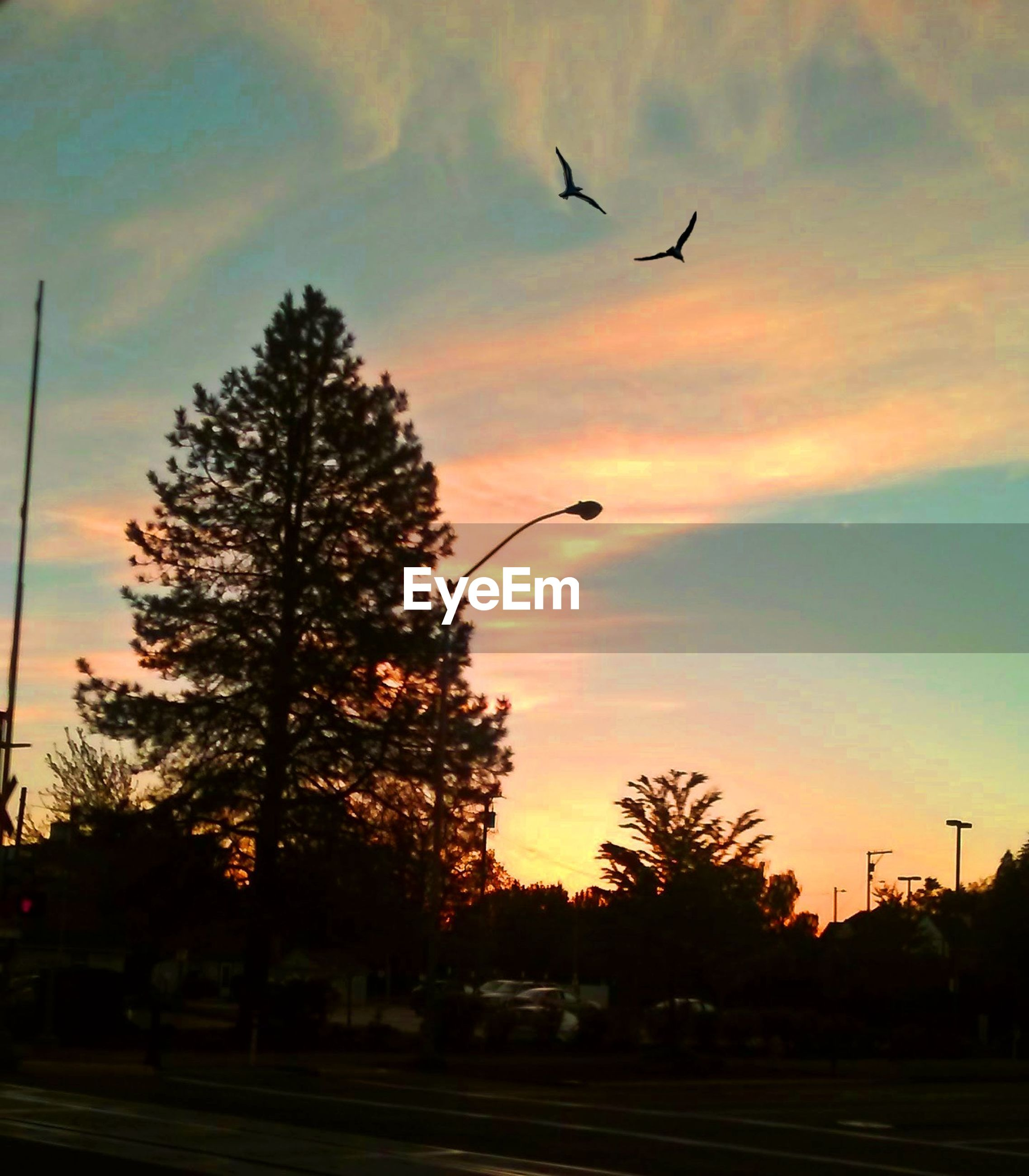 sunset, sky, tree, plant, silhouette, orange color, bird, animal themes, beauty in nature, nature, vertebrate, animal, flying, cloud - sky, animals in the wild, no people, animal wildlife, transportation, one animal, low angle view, outdoors