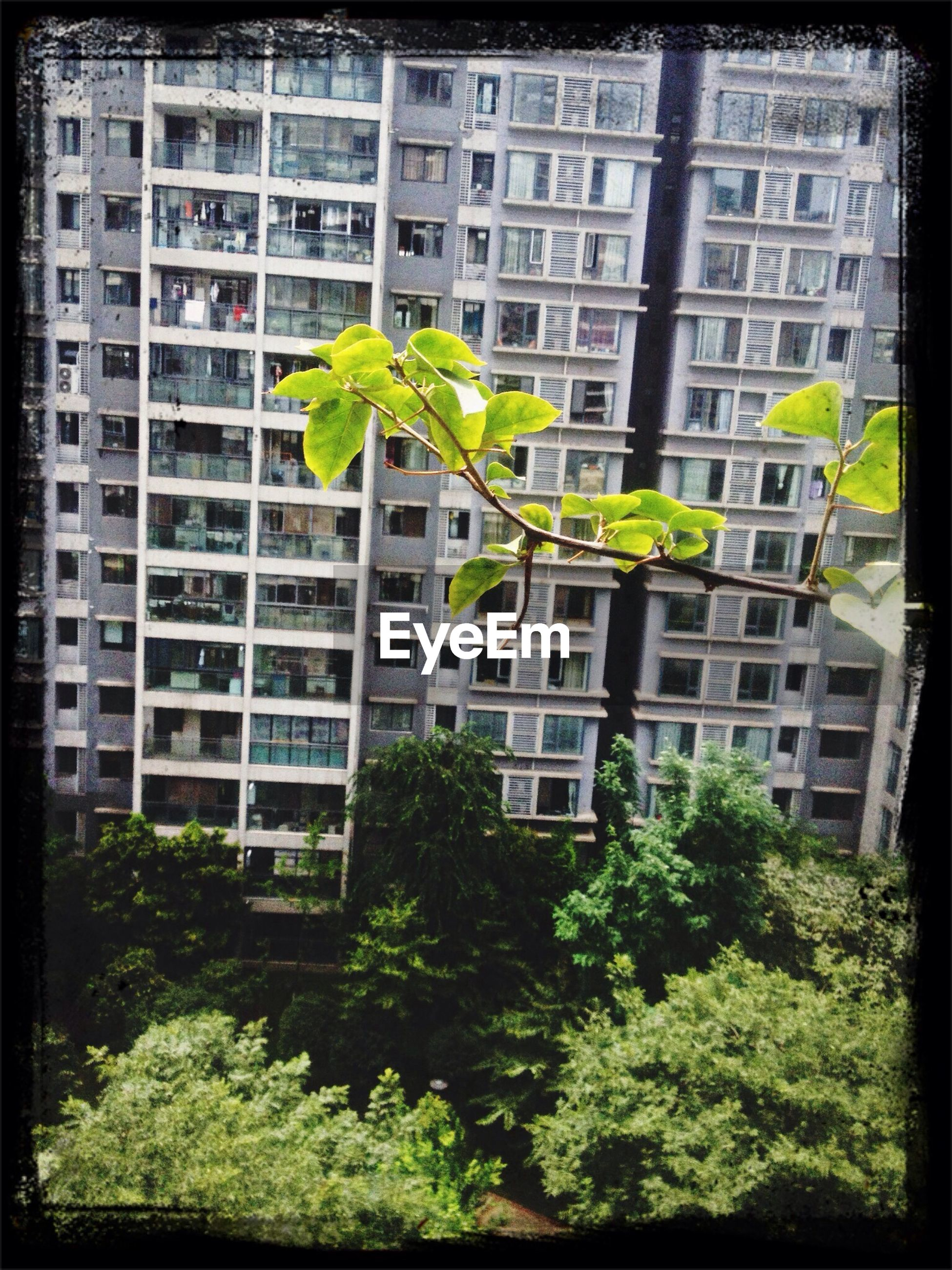 building exterior, architecture, built structure, transfer print, tree, auto post production filter, window, green color, residential building, city, growth, building, residential structure, low angle view, house, day, apartment, outdoors, plant, no people