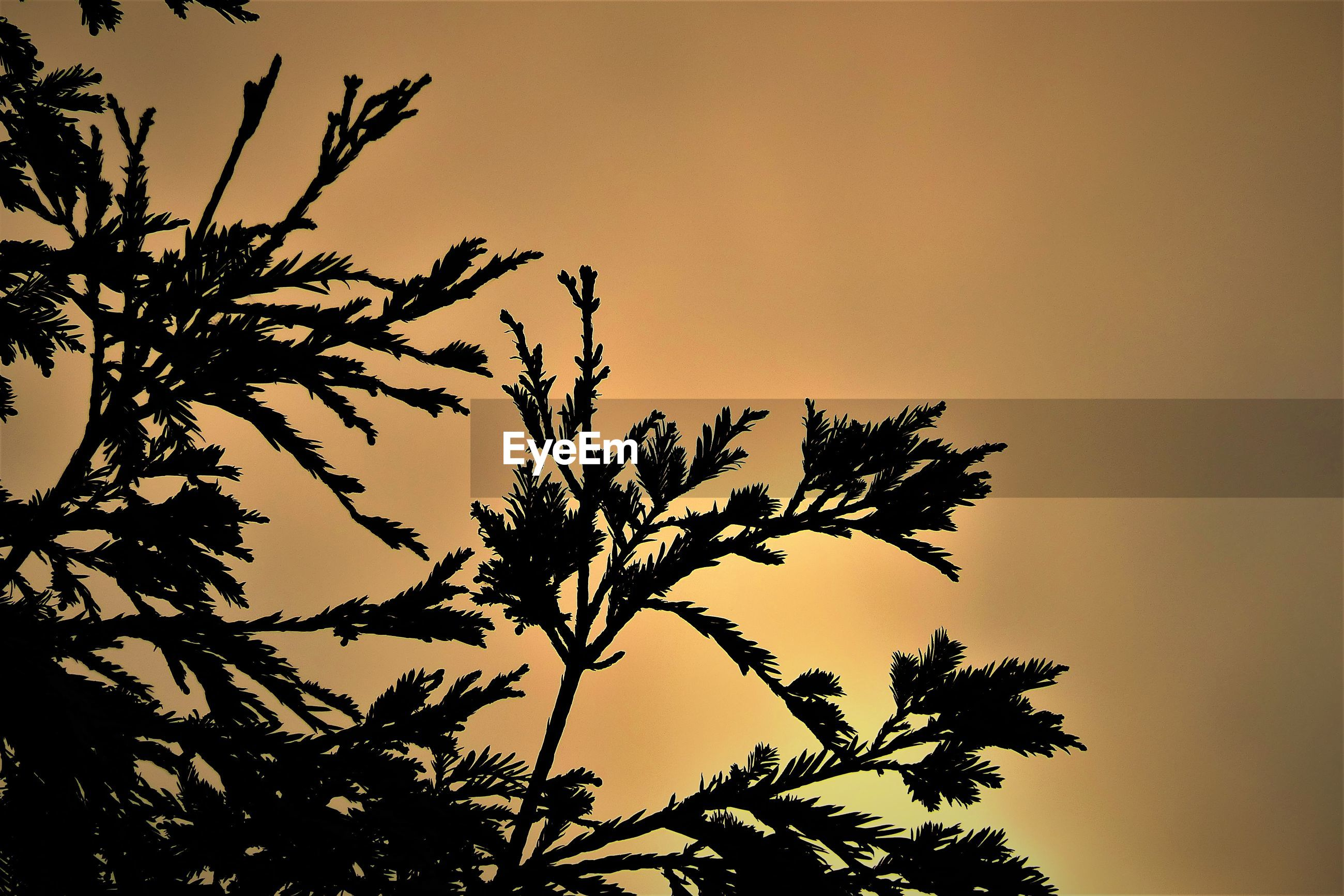 LOW ANGLE VIEW OF SILHOUETTE TREE AGAINST ORANGE SKY