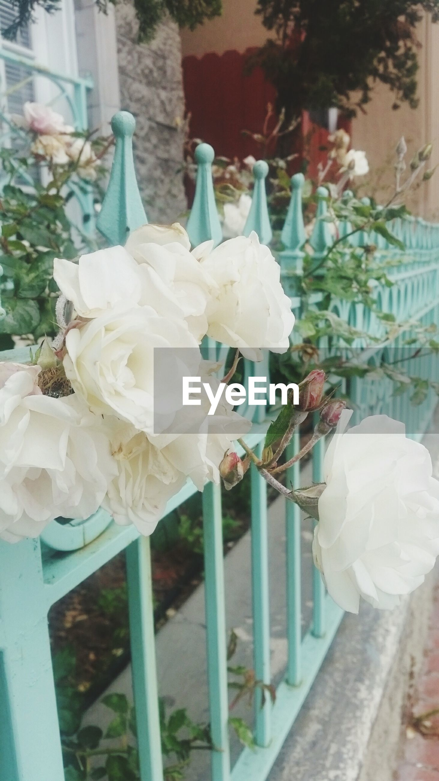 flower, petal, white color, freshness, fragility, close-up, growth, leaf, railing, focus on foreground, flower head, beauty in nature, blossom, branch, bunch of flowers, day, nature, pink color, in bloom, springtime, bloom, no people
