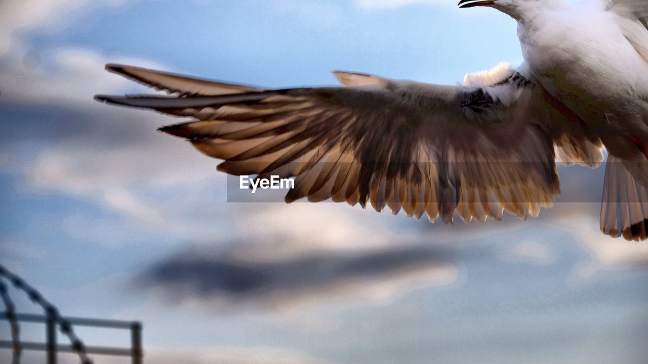 bird, flying, spread wings, animal themes, one animal, animals in the wild, nature, animal wildlife, day, mid-air, beauty in nature, outdoors, no people, close-up, low angle view, sky, bird of prey
