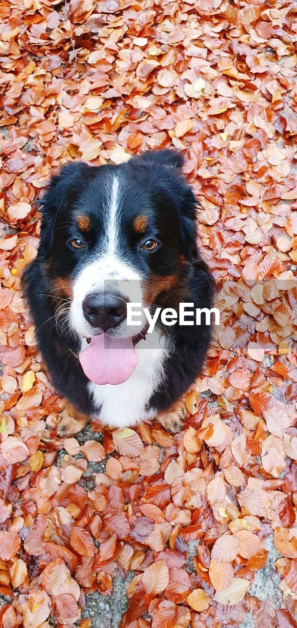 HIGH ANGLE VIEW OF DOG ON LEAVES