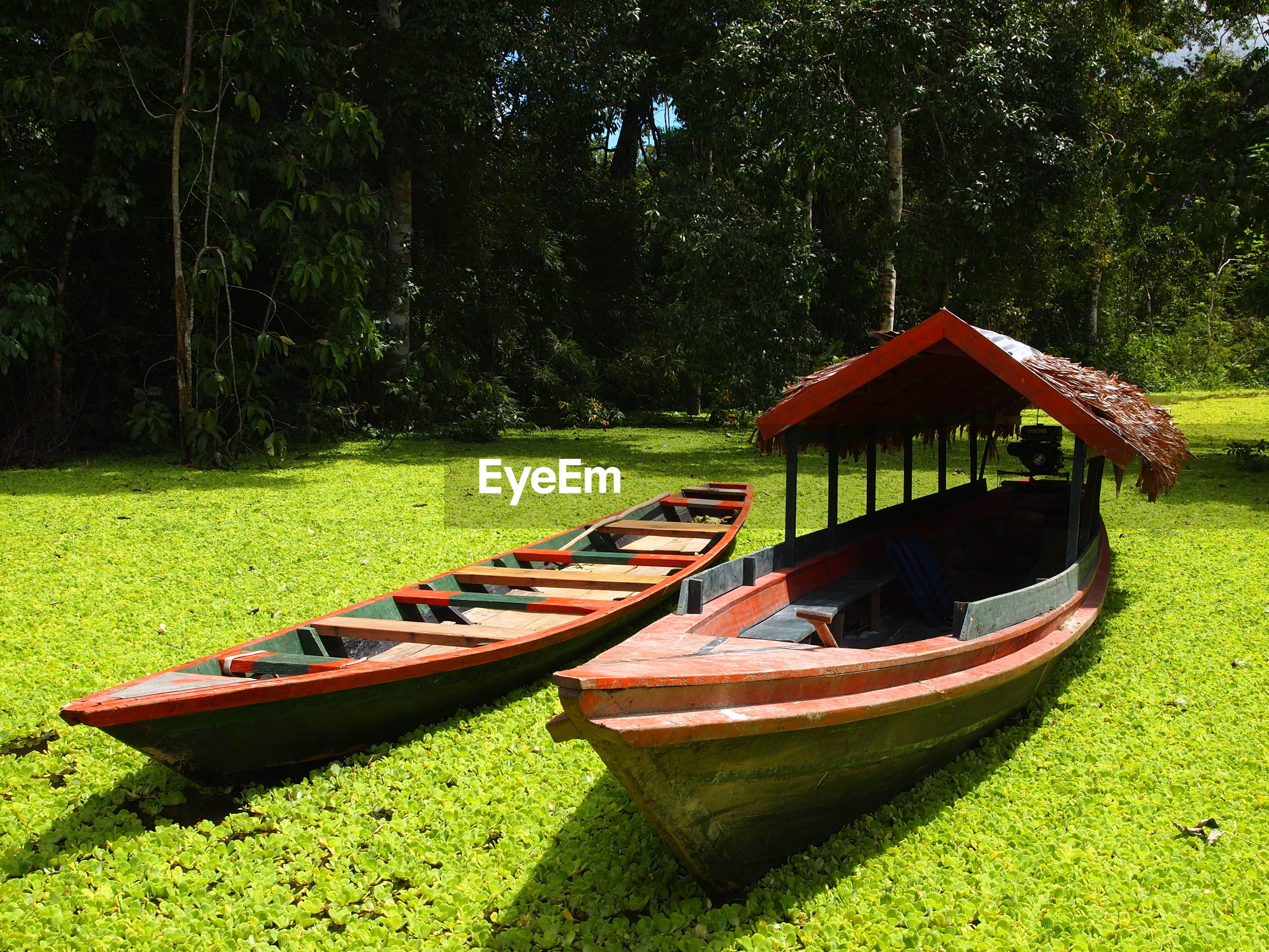 Boat moored on lake by trees in forest