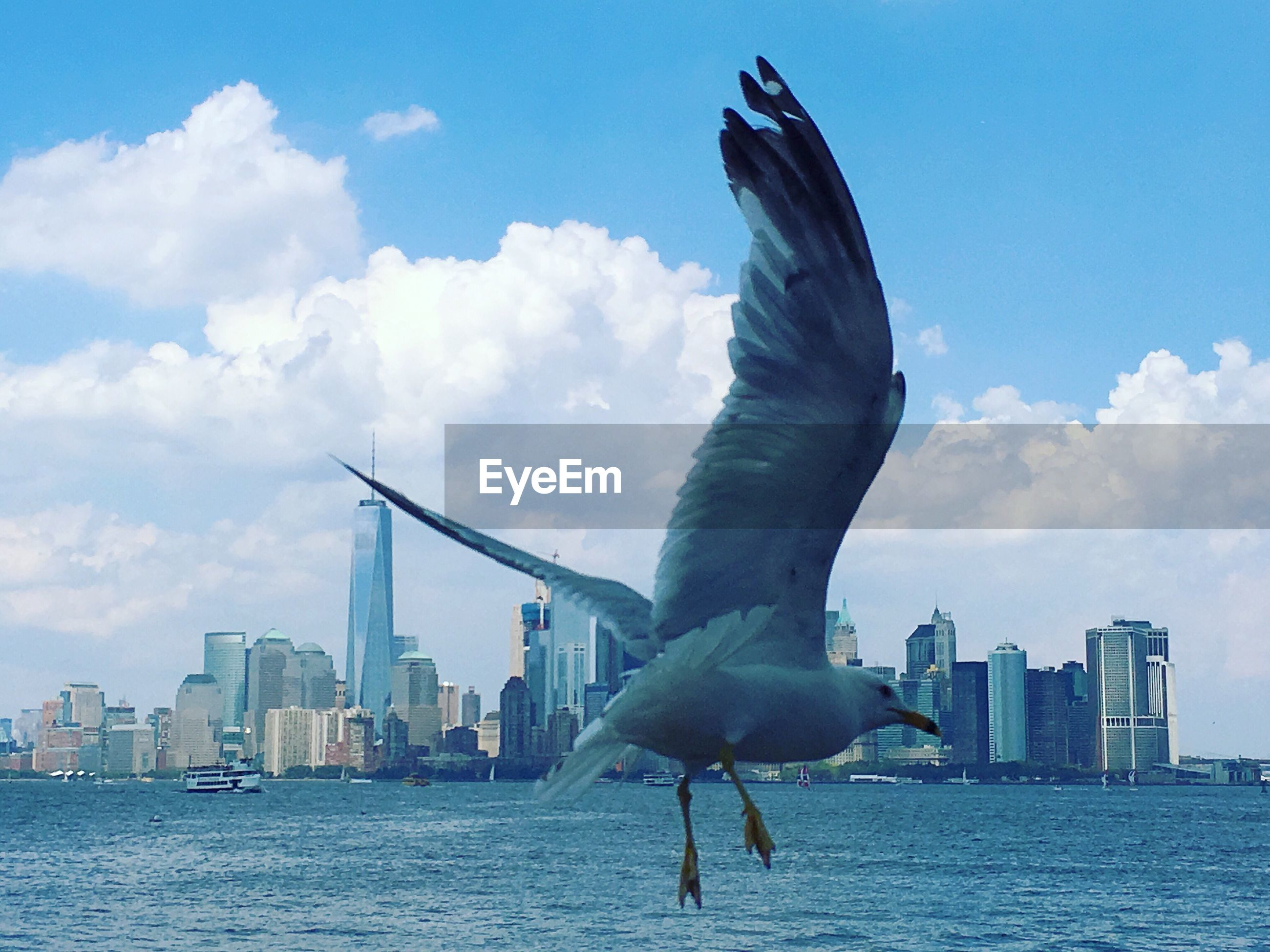 Seagull flying over sea with cityscape in background